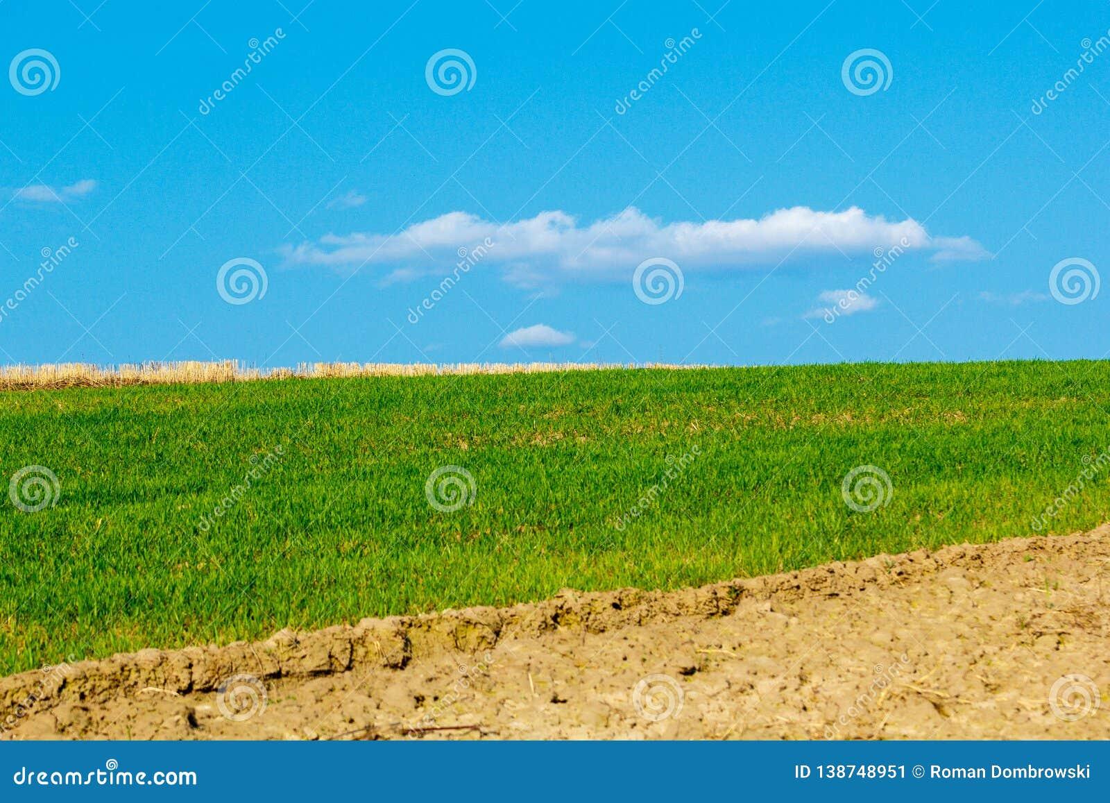 Campo de colheitas da terra e do céu azul bonito acima
