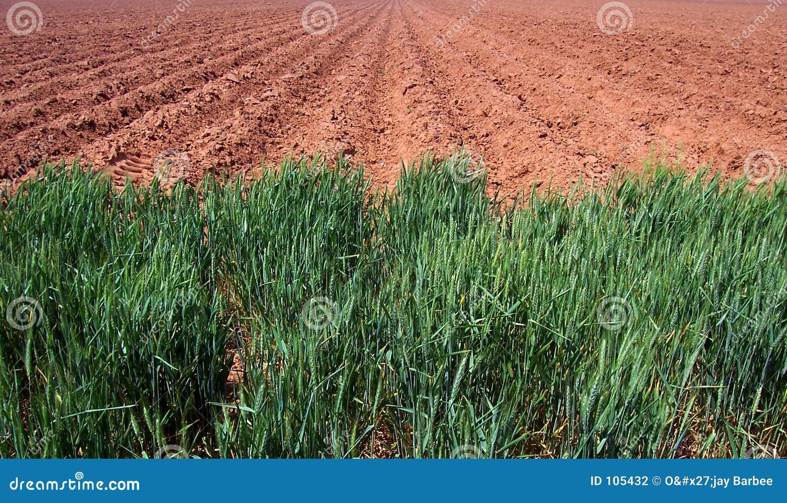 Campo de exploração agrícola arado