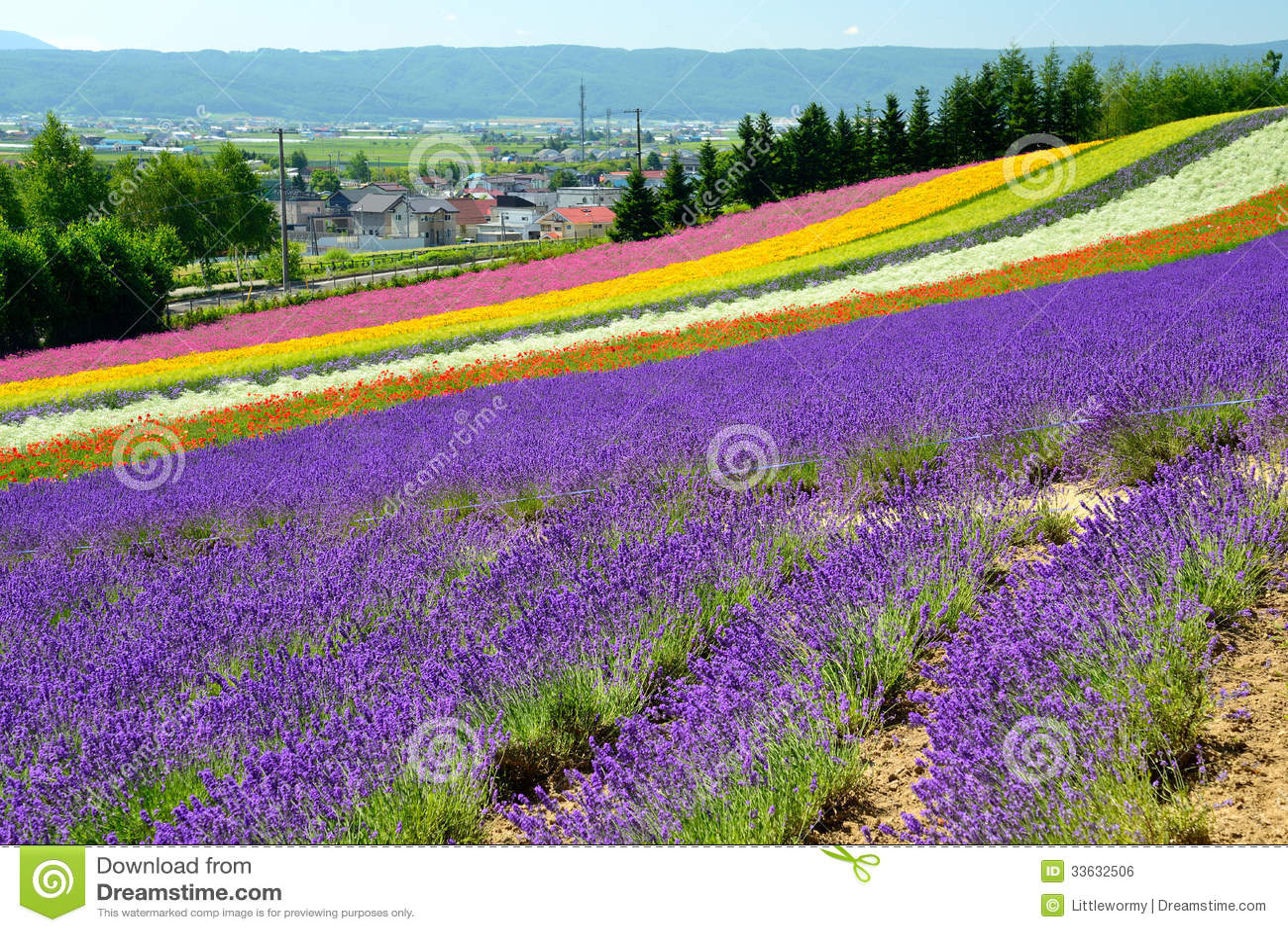 Campo de flor colorido, Hokkaido, Japón