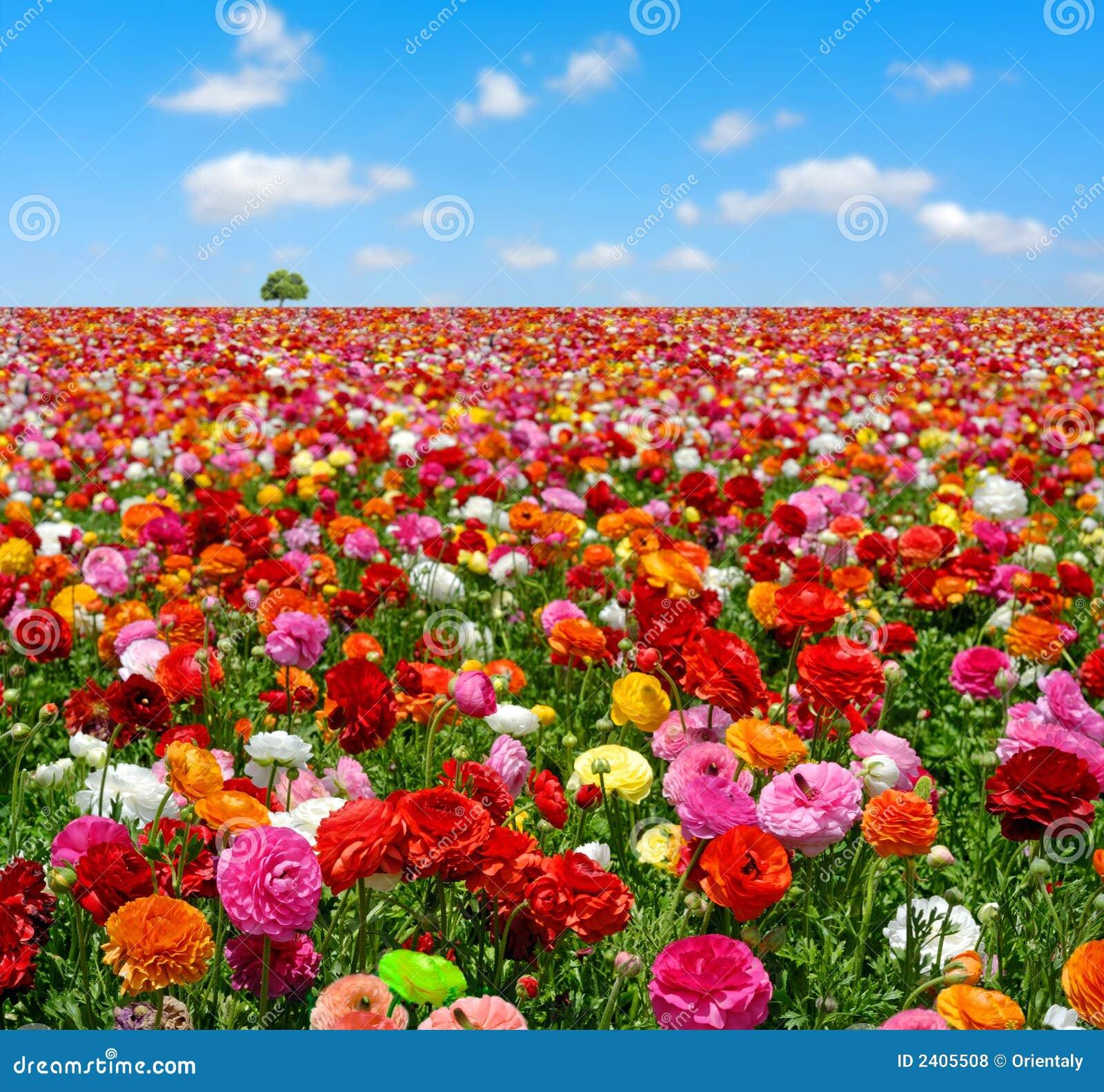 Lindo jardim de flores | Papéis de parede para PC, fotos