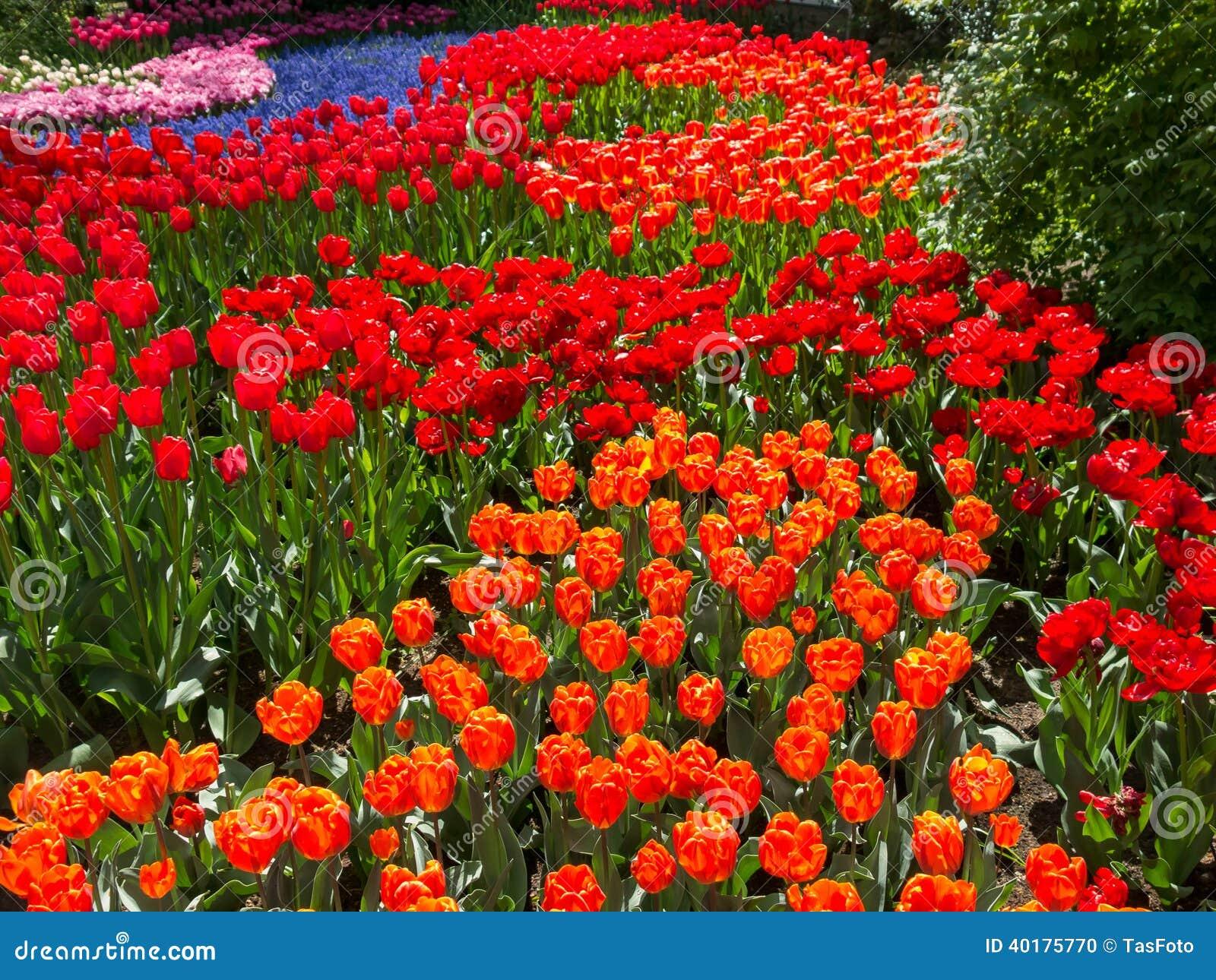 Campo de flores en los jardines de keukenhof holanda foto - Jardines de holanda ...