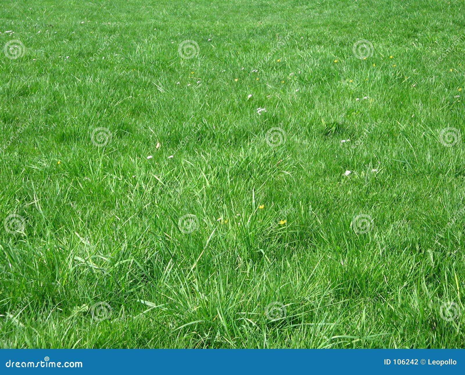 Campo de grama