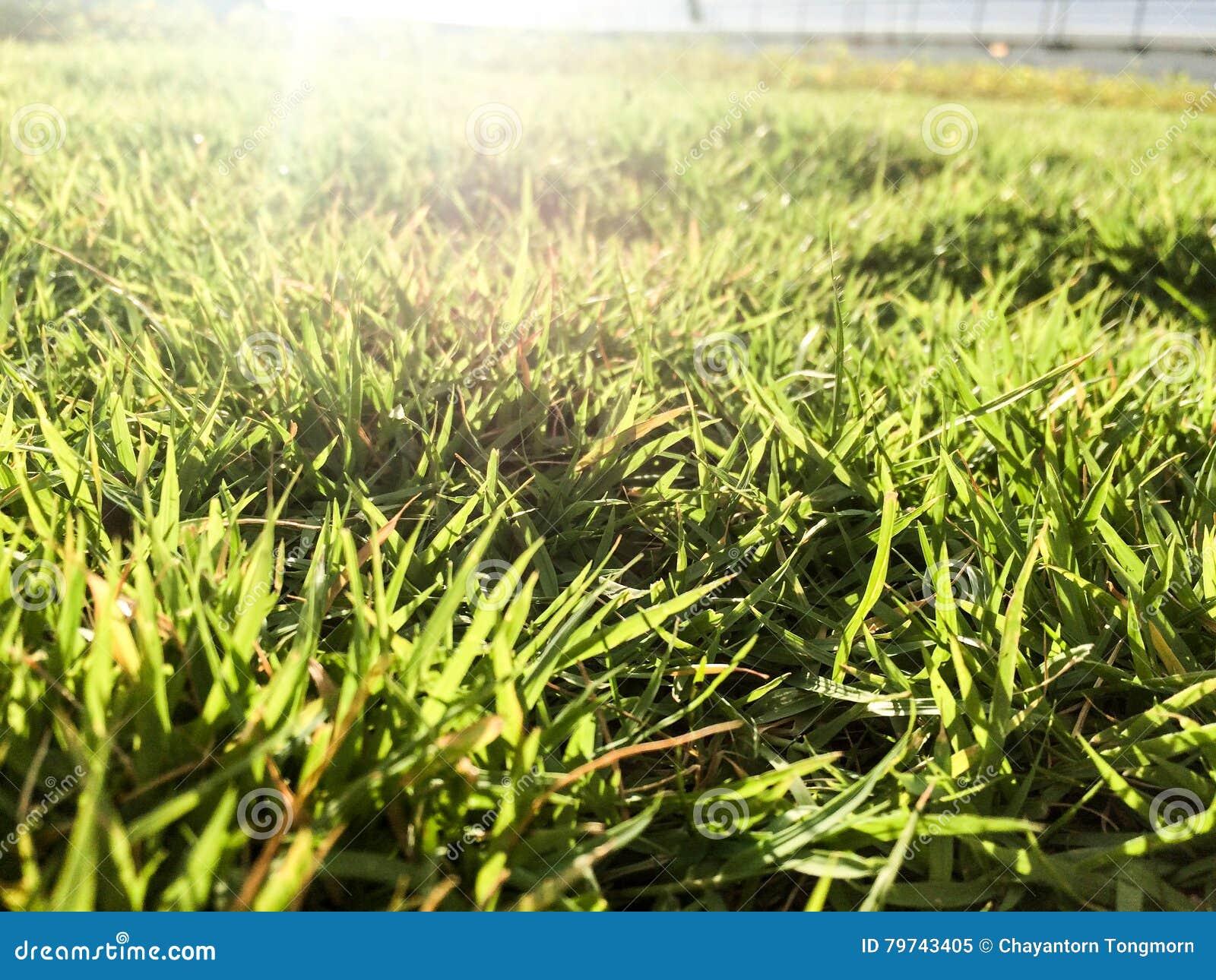Campo de hierba en el último piso del edificio verde por mañana