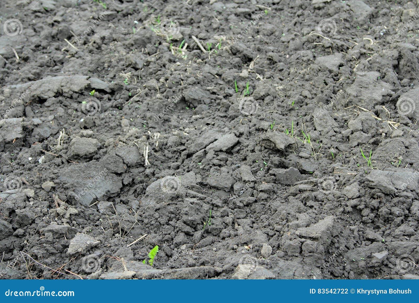 Campo de la agricultura con el suelo negro para plantar for Tierra suelo wallpaper