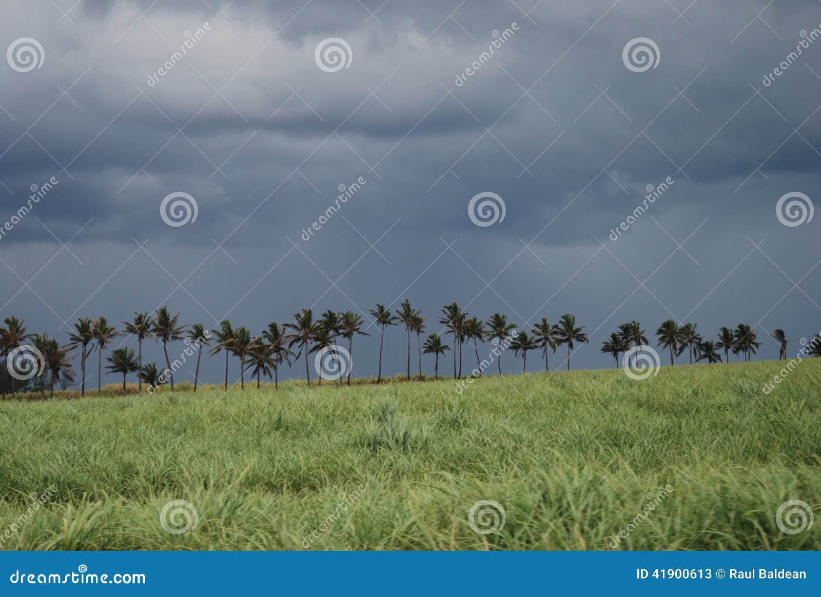 Campo de la caña de azúcar en Mauricio