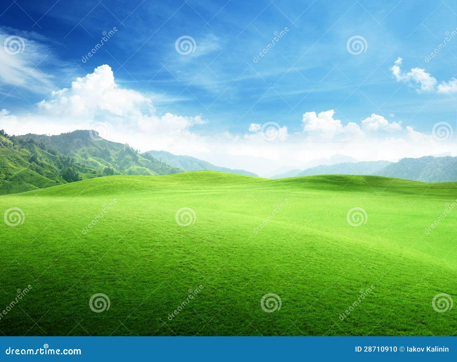 Campo de la hierba en montaña