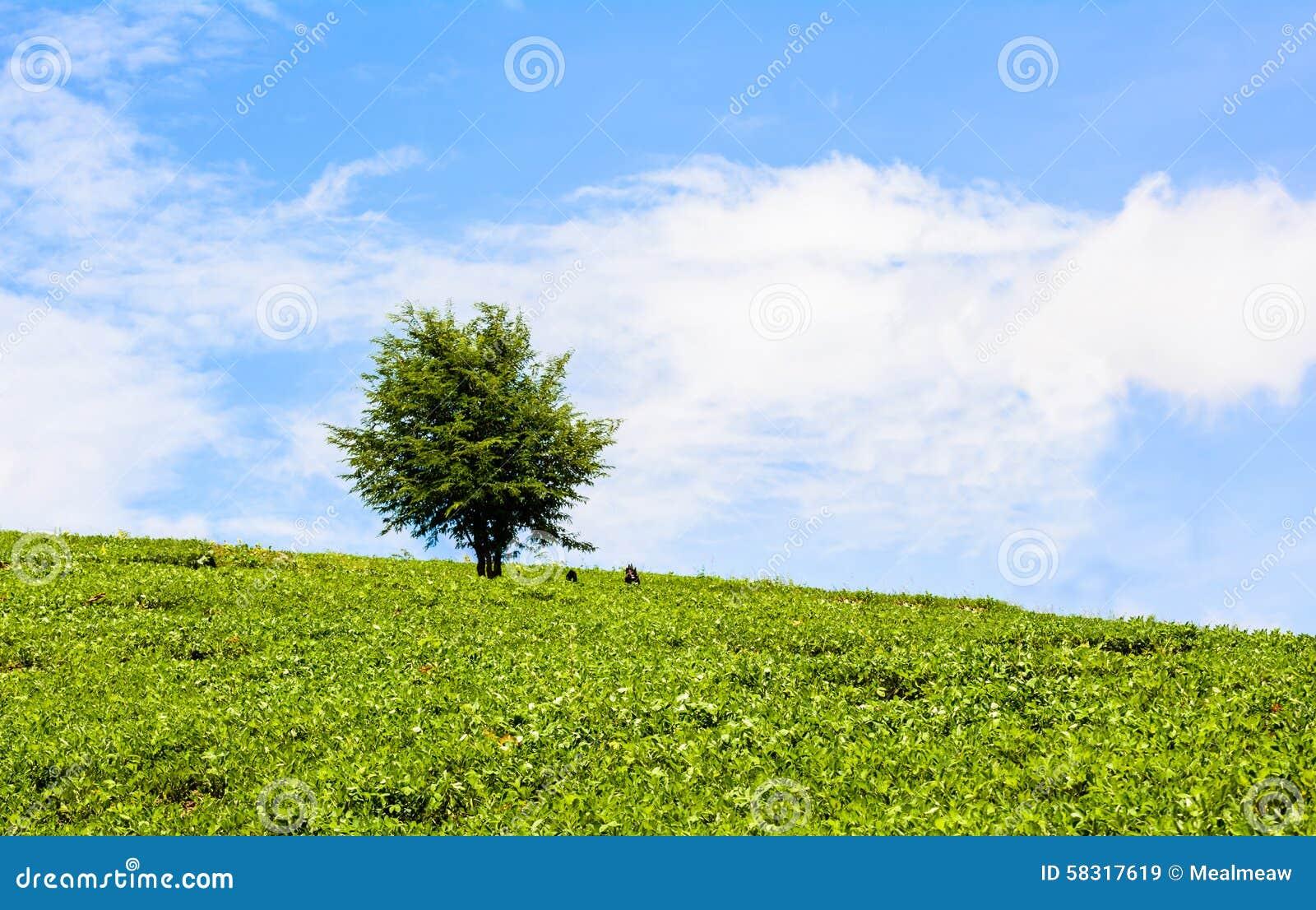 Campo de la hierba verde y de los árboles en el cielo azul