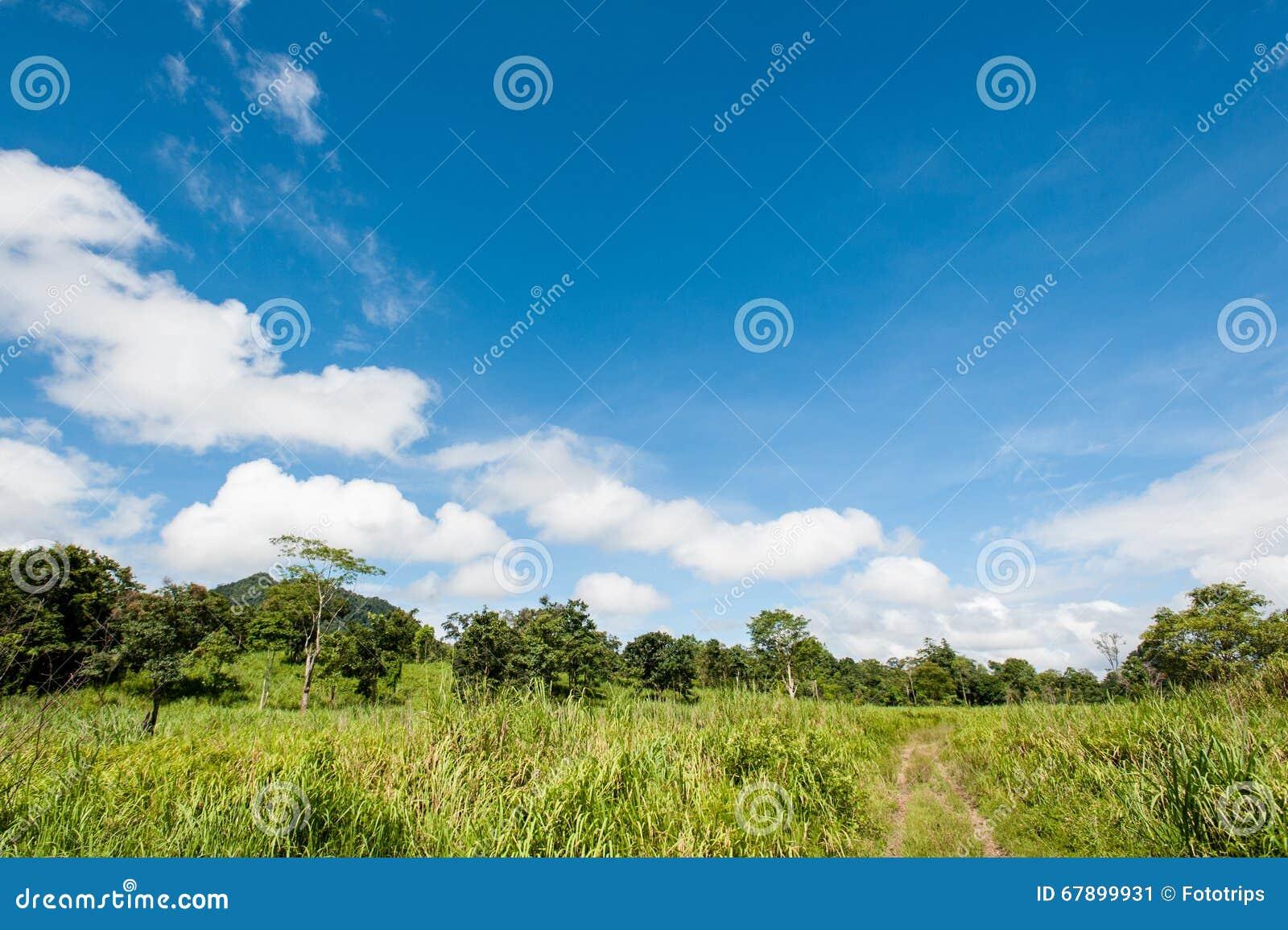 Campo de la hierba y del bosque de la primavera