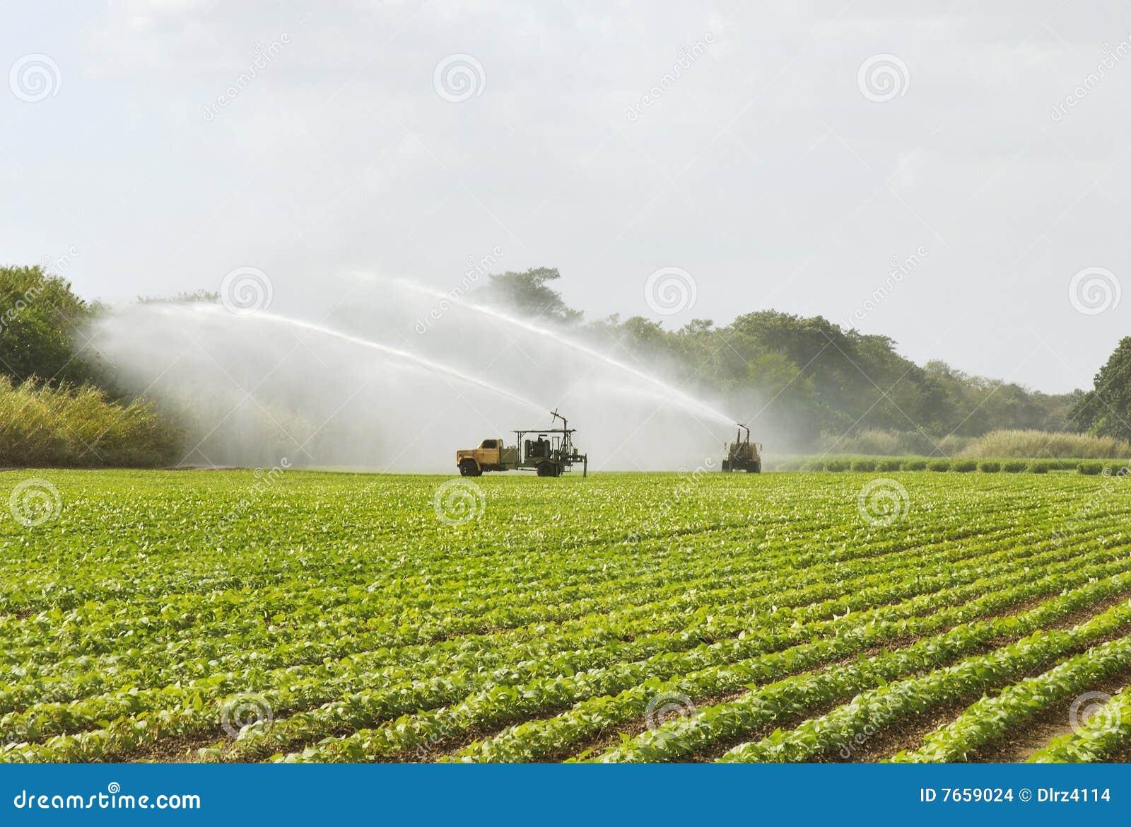 Campo de la irrigación