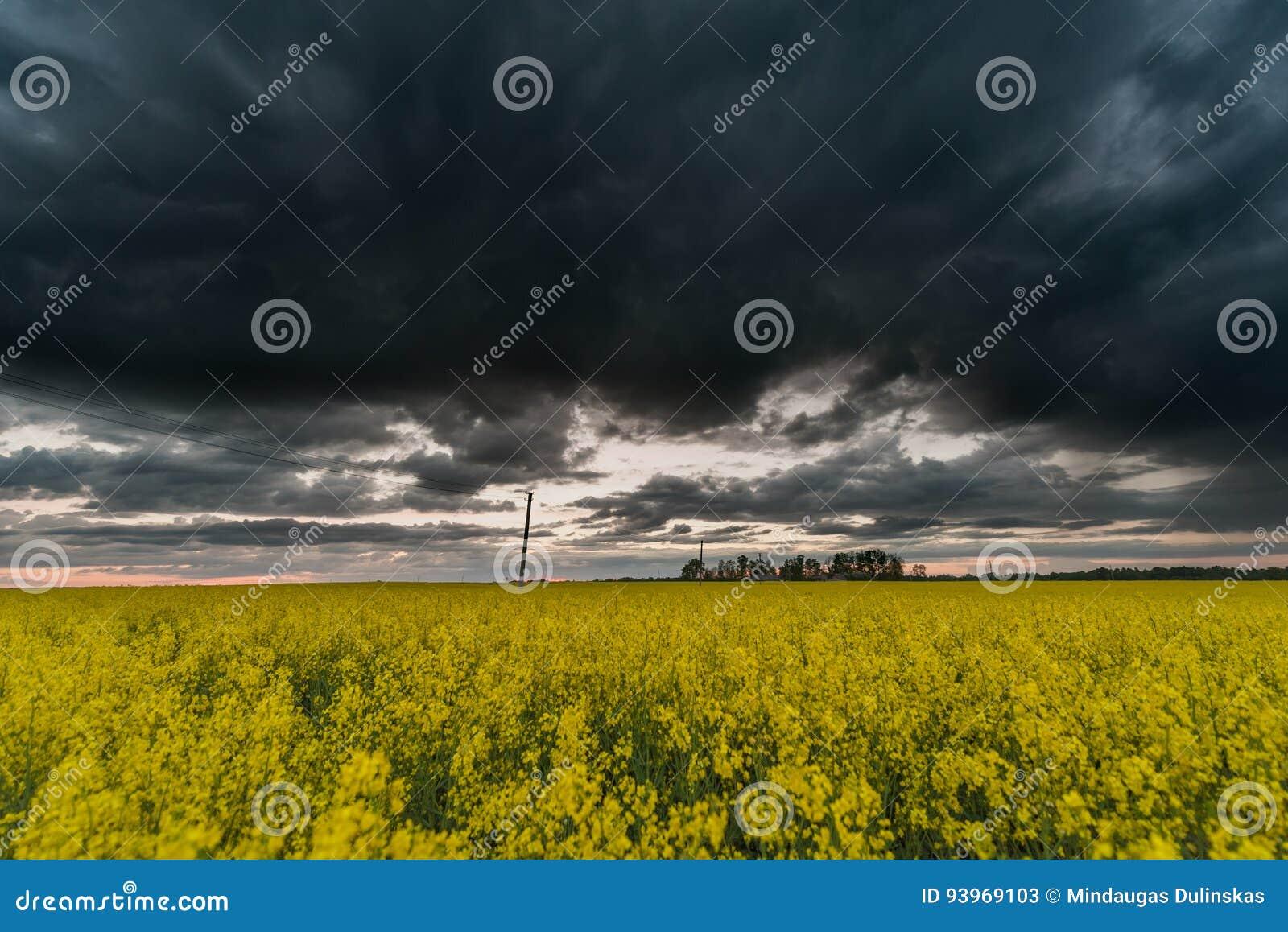 Campo de la rabina con el cielo nublado tempestuoso oscuro en fondo