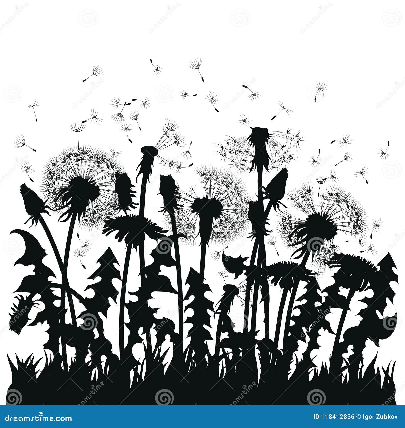 Campo de las flores del diente de león Siluetas negras de las plantas del verano en un fondo blanco El esquema de un claro con
