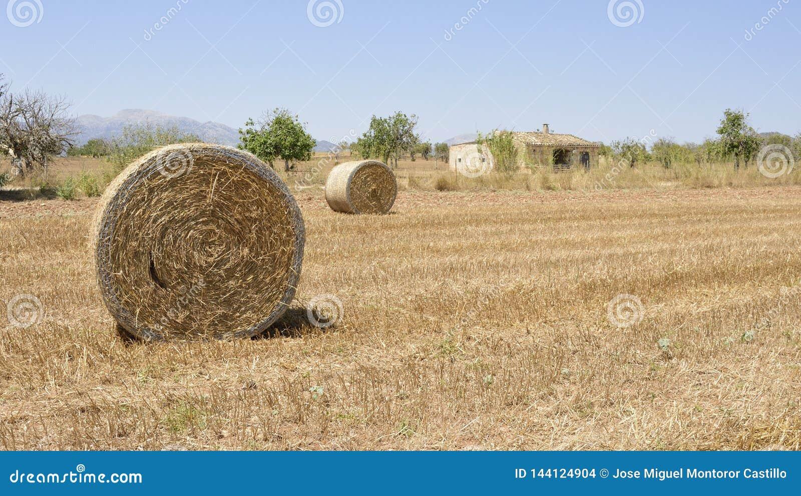 Campo de Mallorca en verano con las balas de la paja