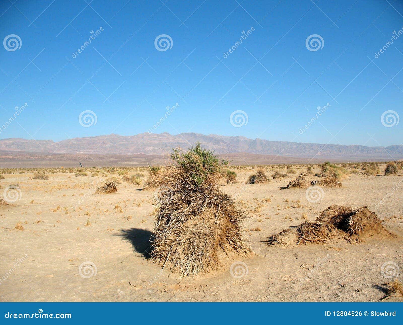 Campo de milho Death Valley do diabo