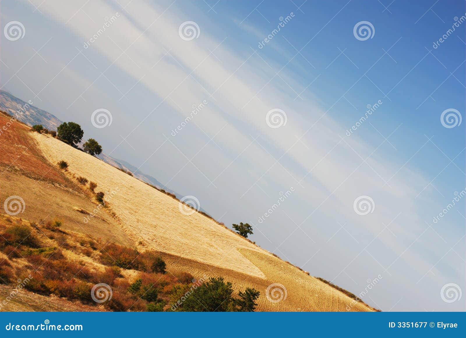 Campo de milho no campo