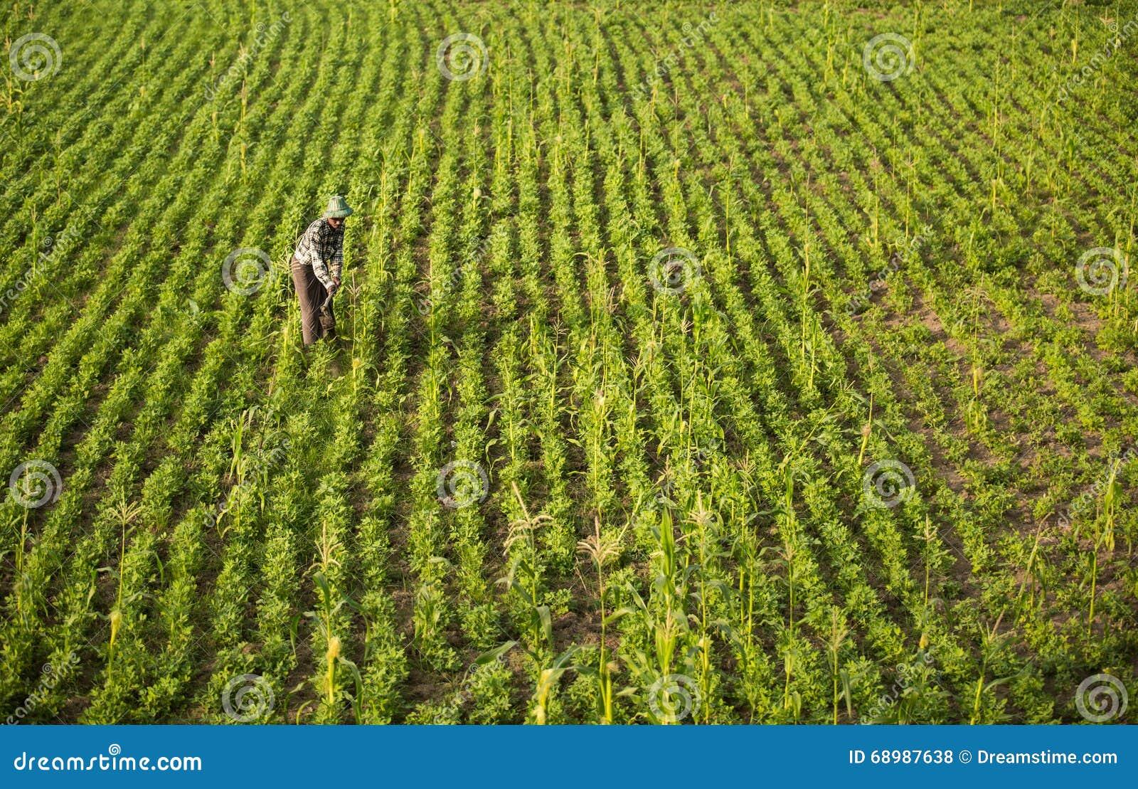 Campo de Myanmar