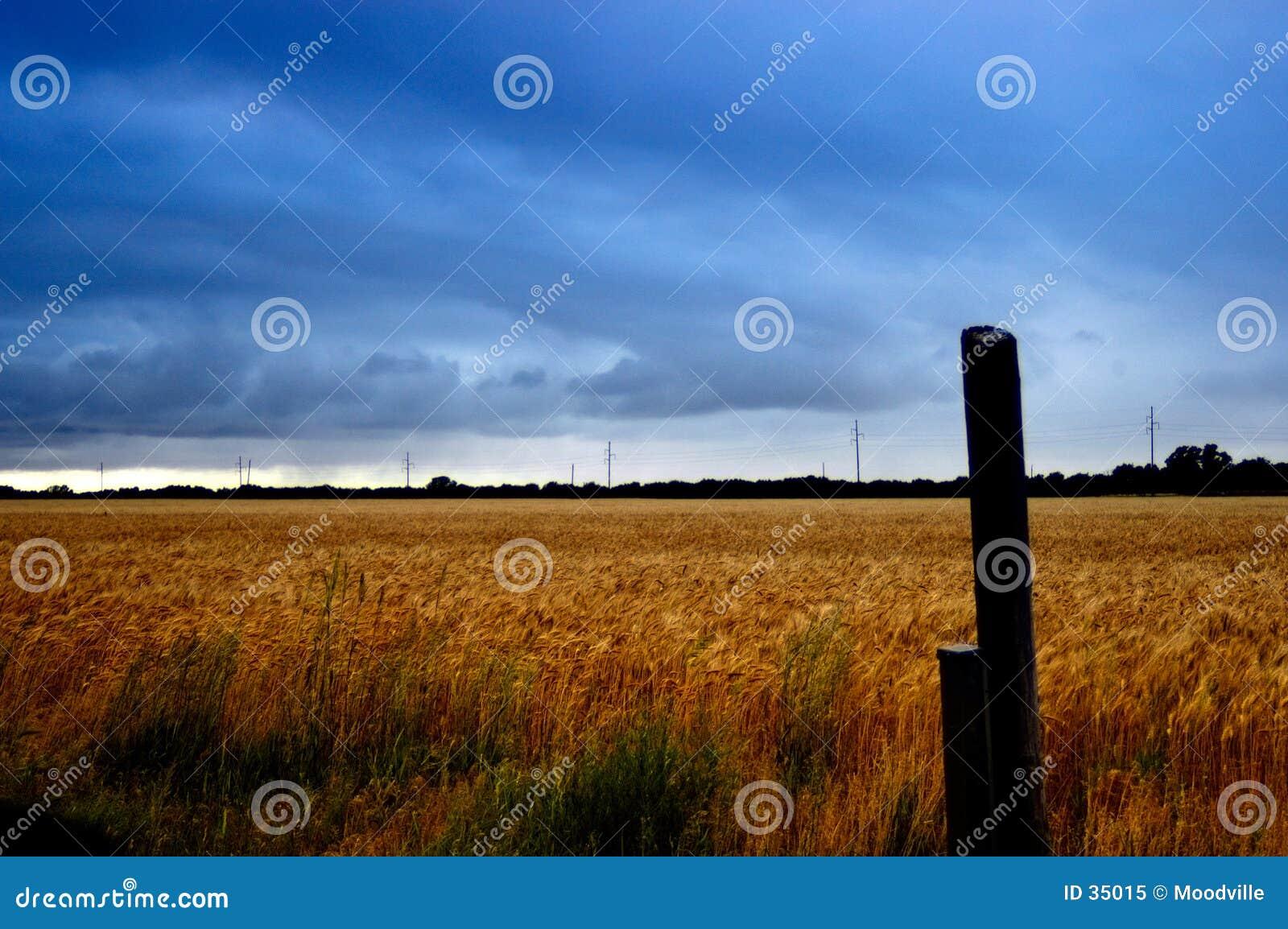 Download Campo de trigo tempestuoso imagen de archivo. Imagen de kansas - 35015