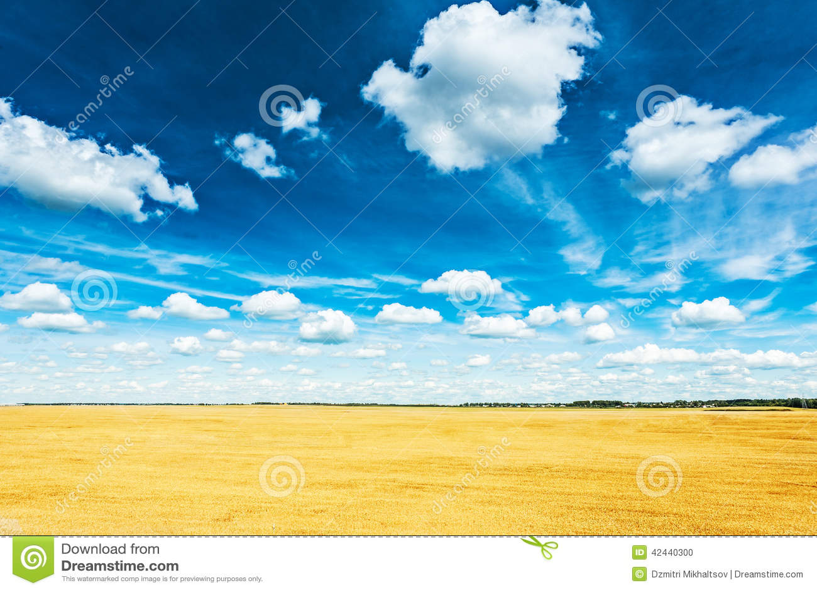 Campo de trigo y opinión nublada azul del cielo de la altura