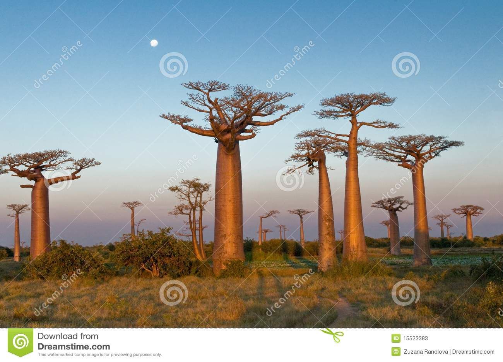 Campo dei baobab