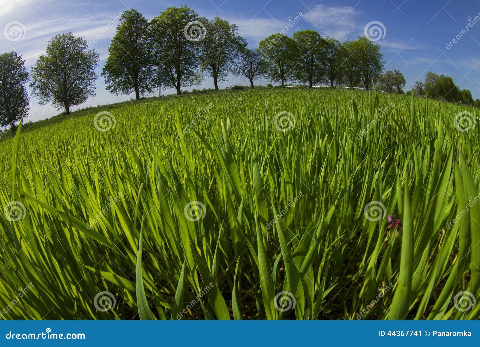 Campo dei verdi della molla