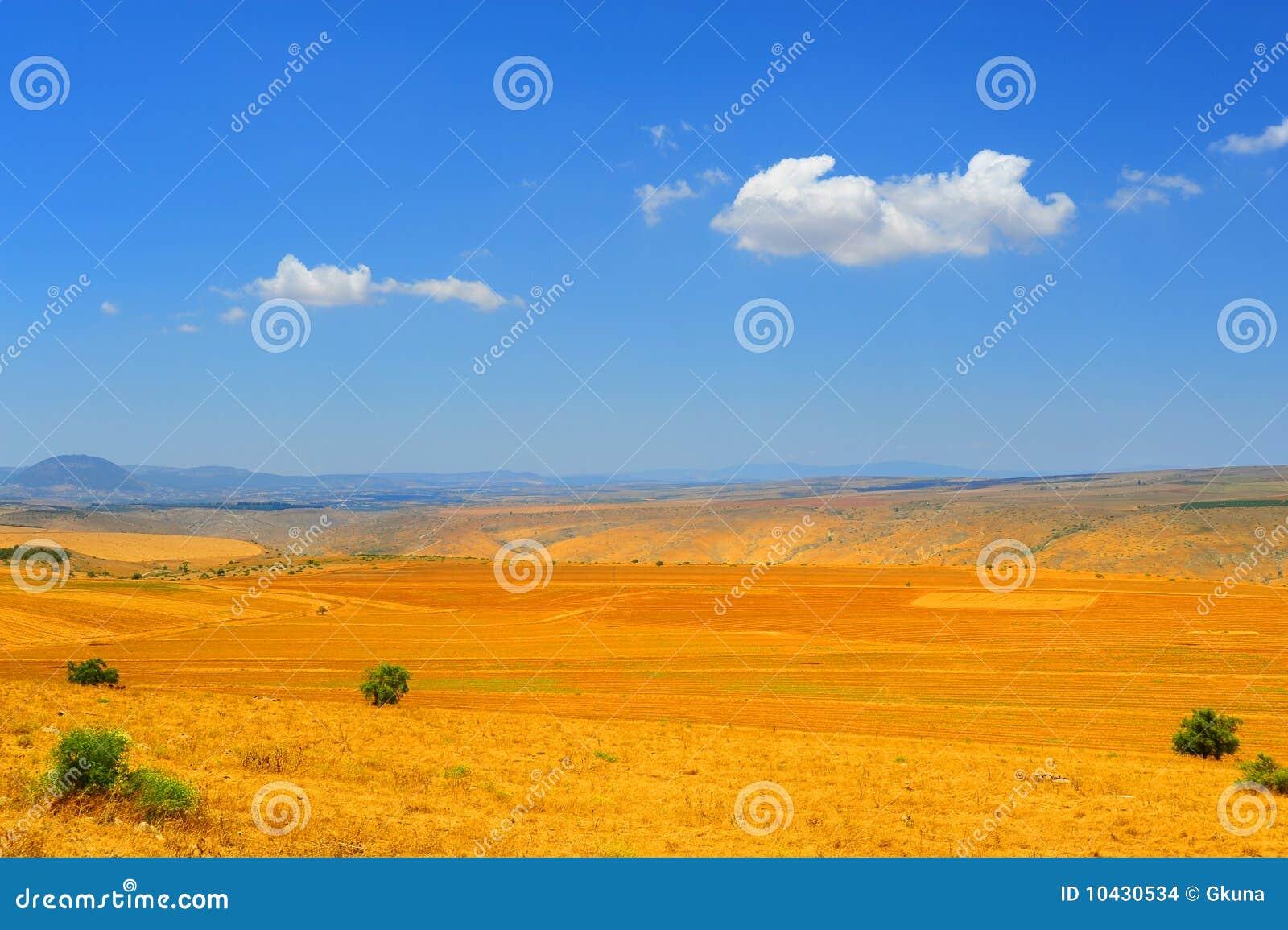 Campo del otoño