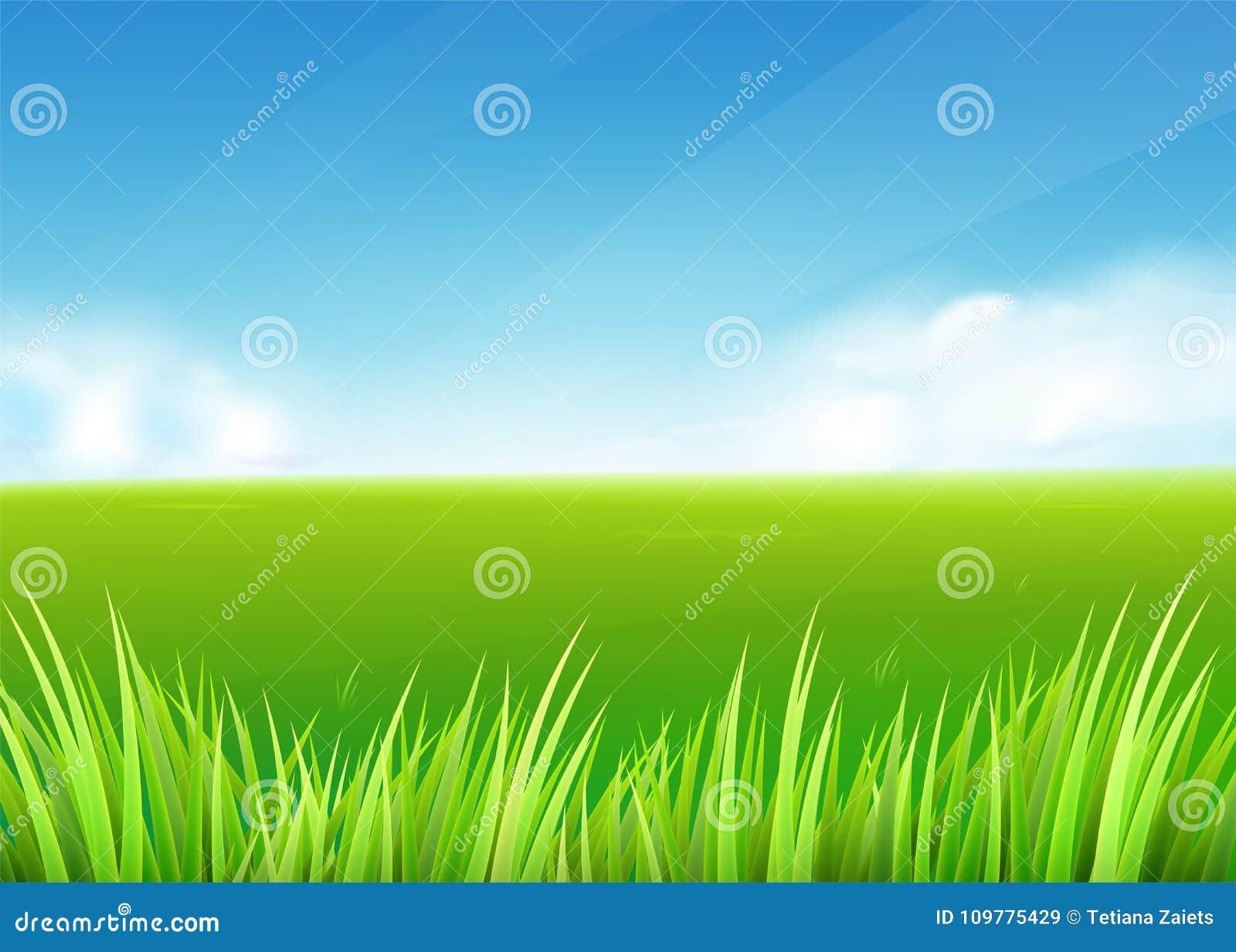 Campo del prato Fondo della natura della primavera o di estate con il paesaggio dell erba verde