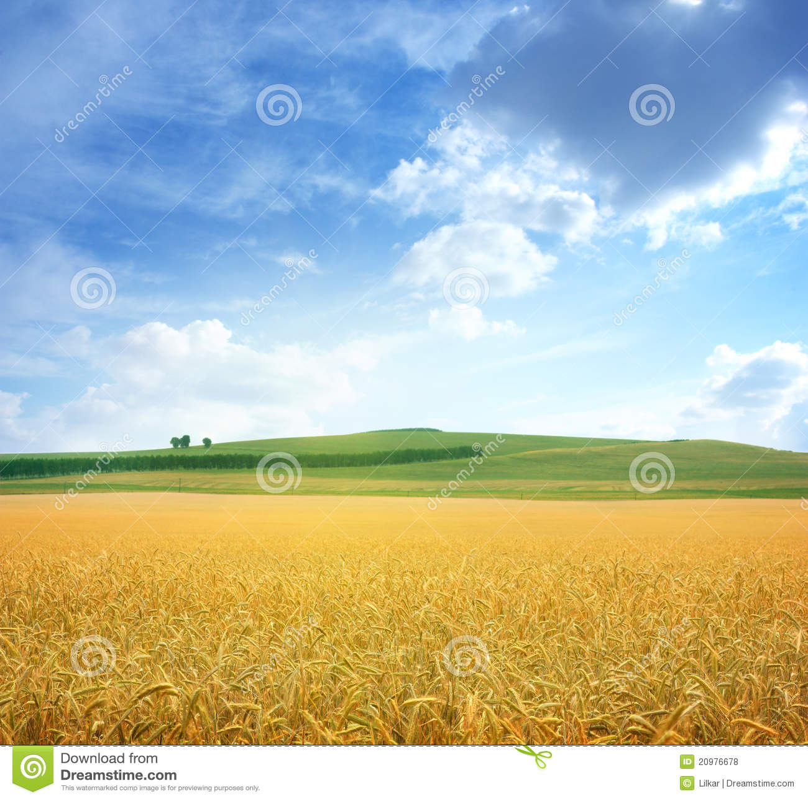 Campo del trigo