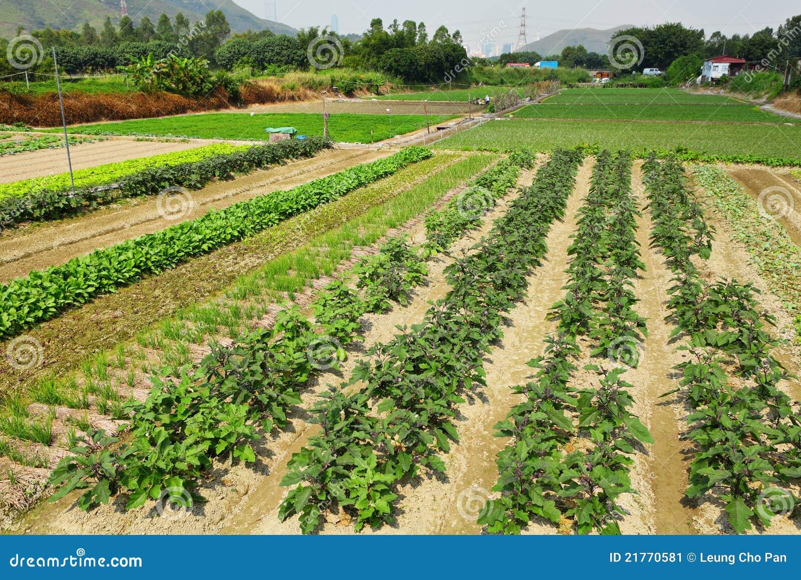 Campo dell azienda agricola