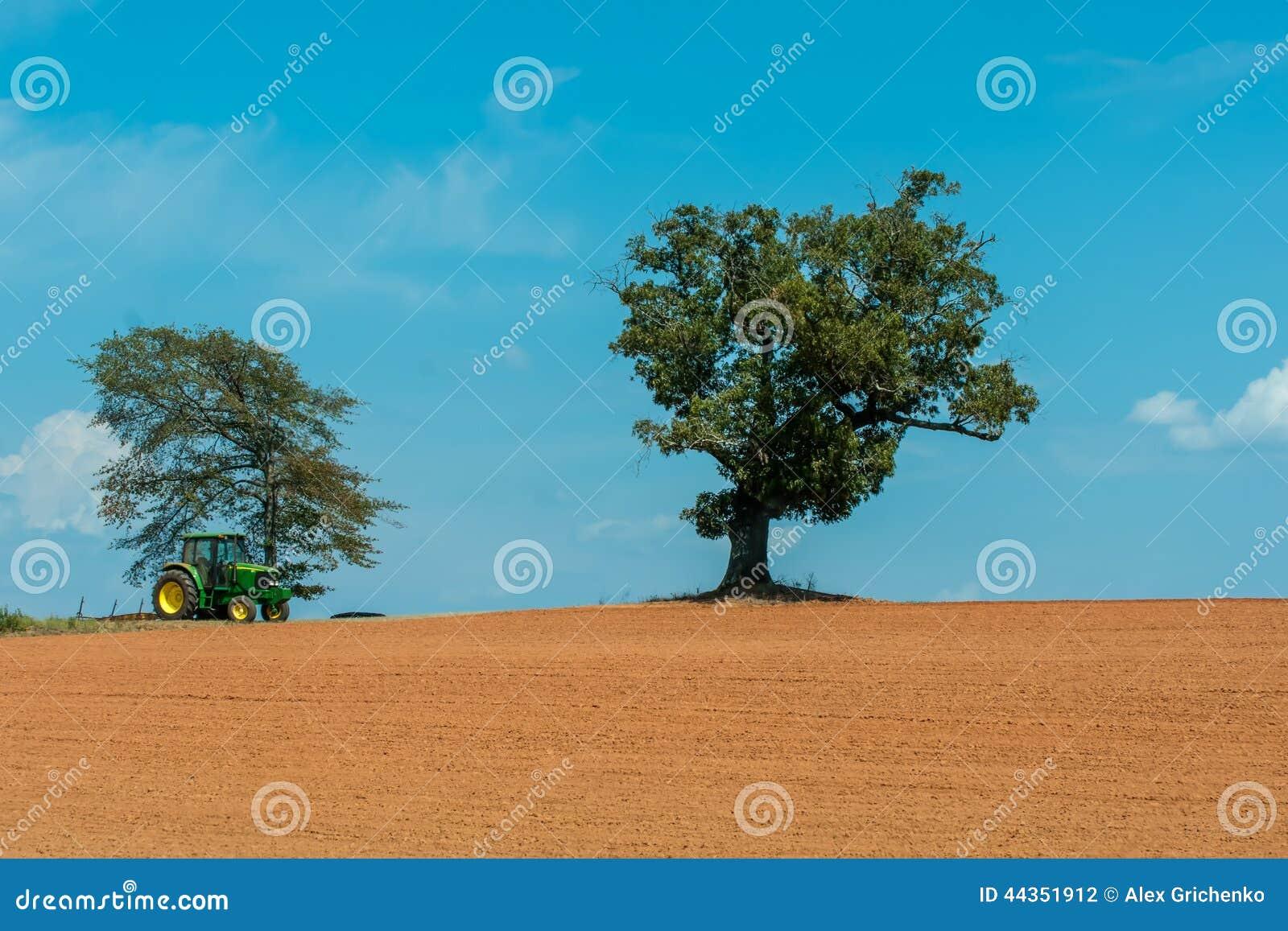 Campo dell azienda agricola con l albero solo