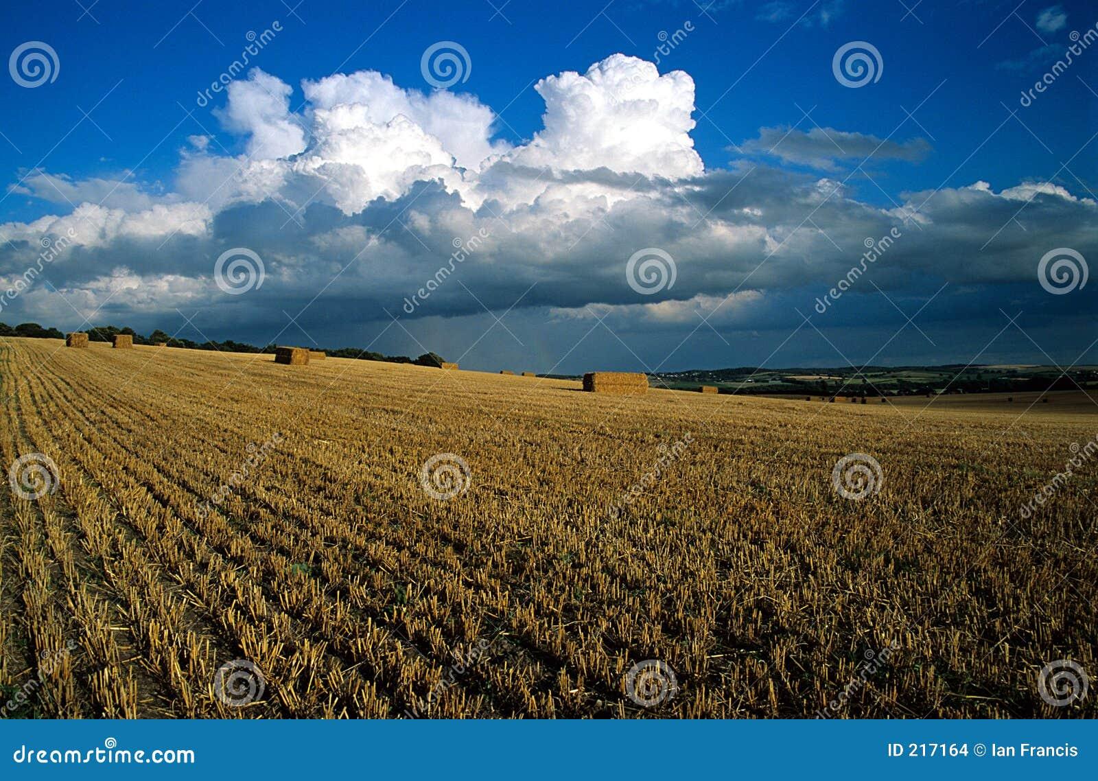 Download Campo della raccolta fotografia stock. Immagine di fieno - 217164