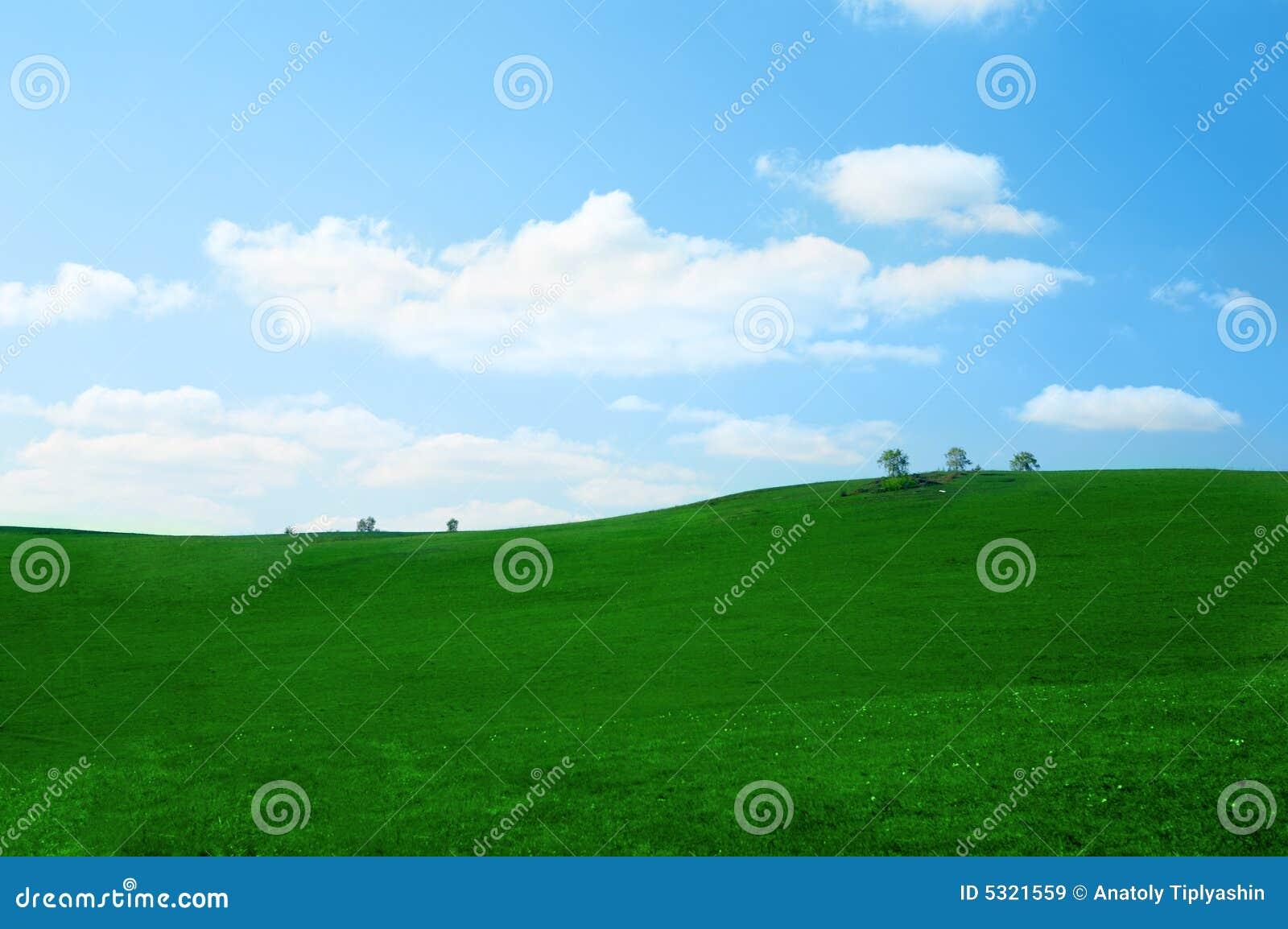Download Campo di erba verde immagine stock. Immagine di molla - 5321559