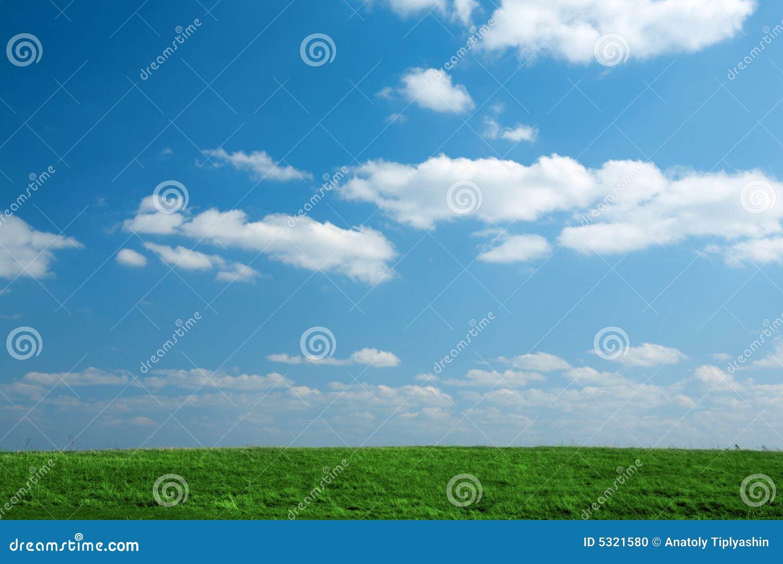 Download Campo di erba verde fotografia stock. Immagine di estate - 5321580