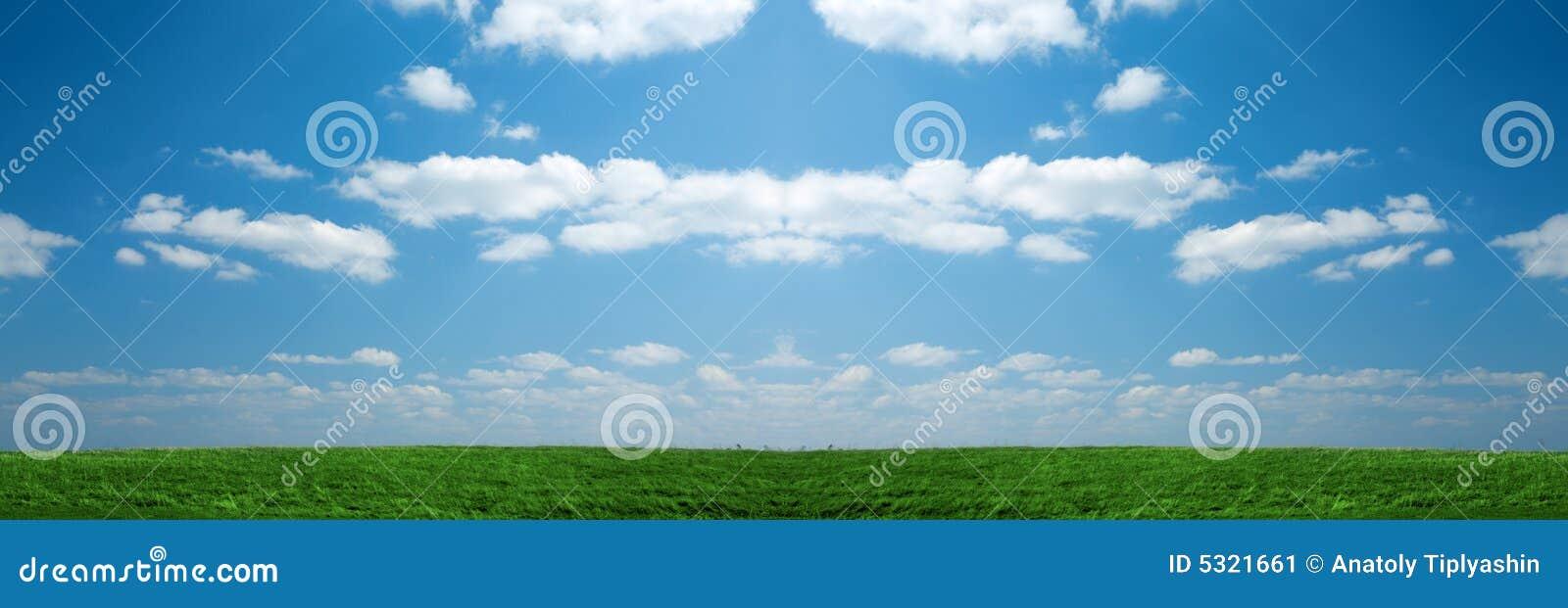Download Campo di erba verde immagine stock. Immagine di sunny - 5321661