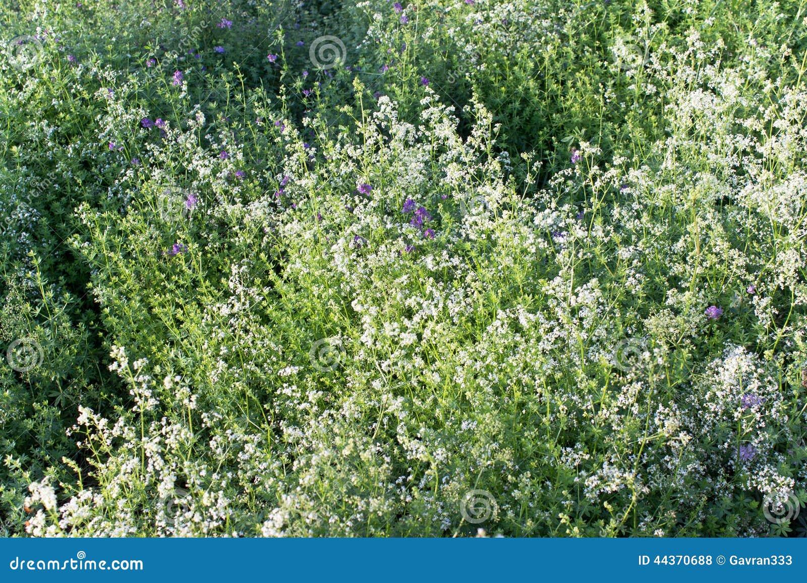 Campo di fiore e dell erba nell ambito della luce solare