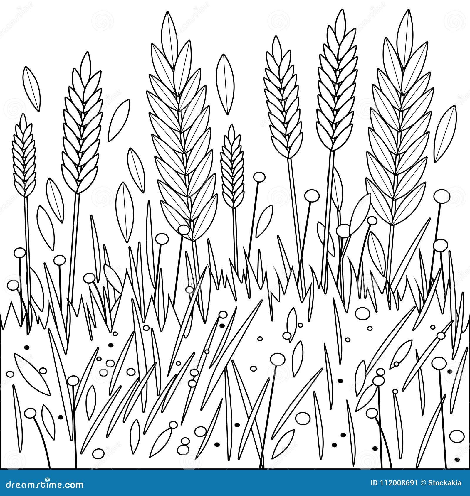 Campo Di Grano Di Orzo O Di Segale Pagina In Bianco E Nero Del Libro Da Colorare Illustrazione Vettoriale Illustrazione Di Cereale Alimento 112008691