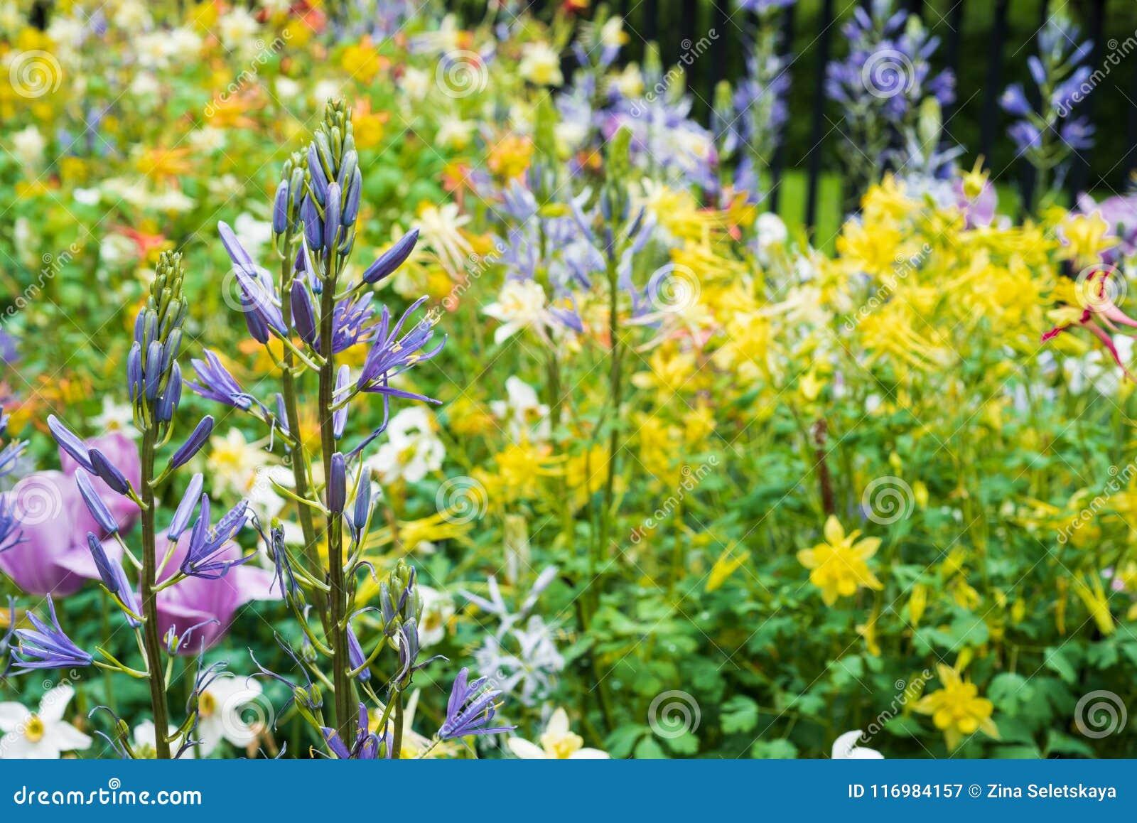 Fiori Gialli Normandia.Campo Di Piccoli Fiori Gialli Con I Fiori Viola Su Priorita Alta