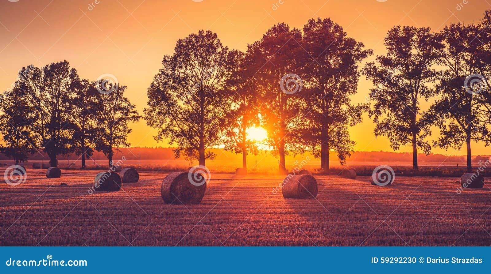 Campo di tramonto