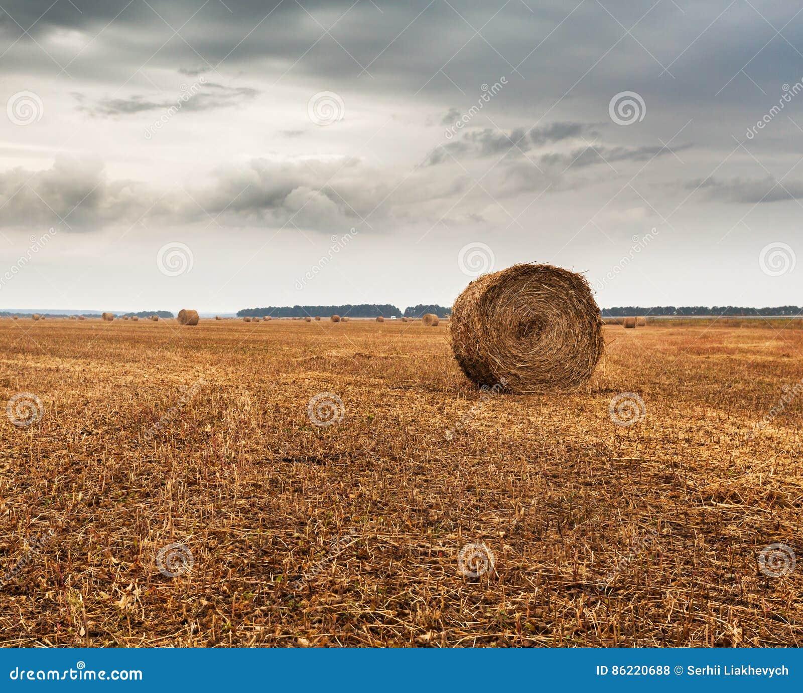 Campo do outono com as polias do feno e do céu dramático