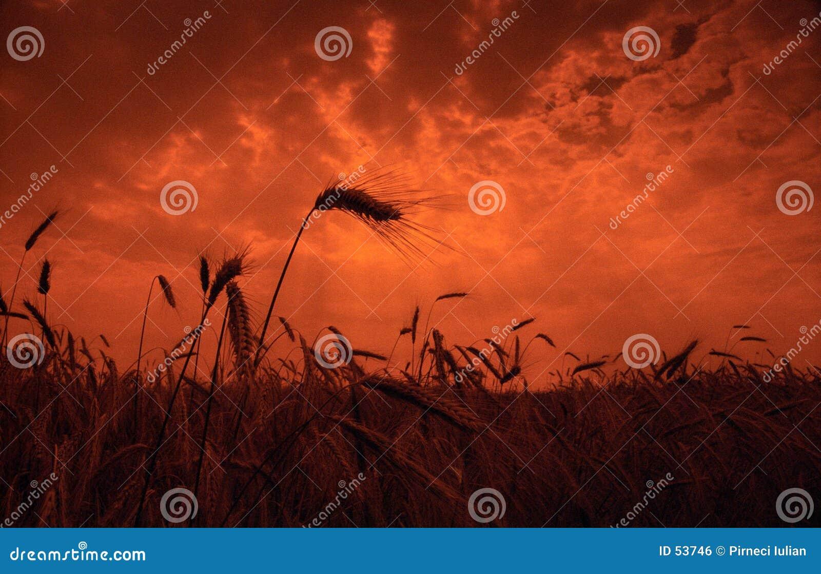 Campo do por do sol