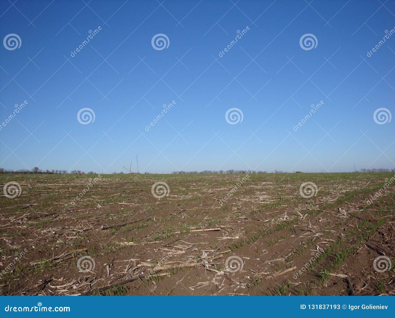 Campo dopo la raccolta nel cielo blu del fondo