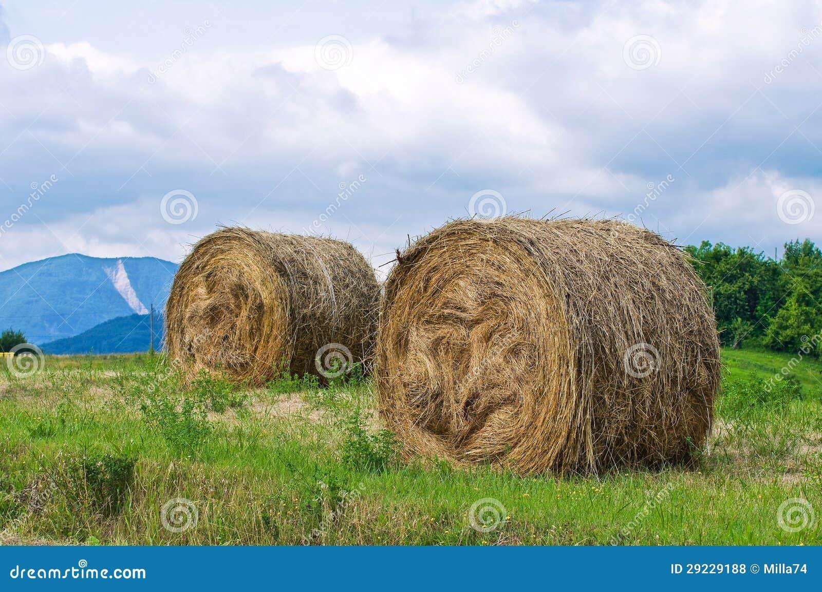 Download Campo dos pacotes de feno. foto de stock. Imagem de agricultura - 29229188