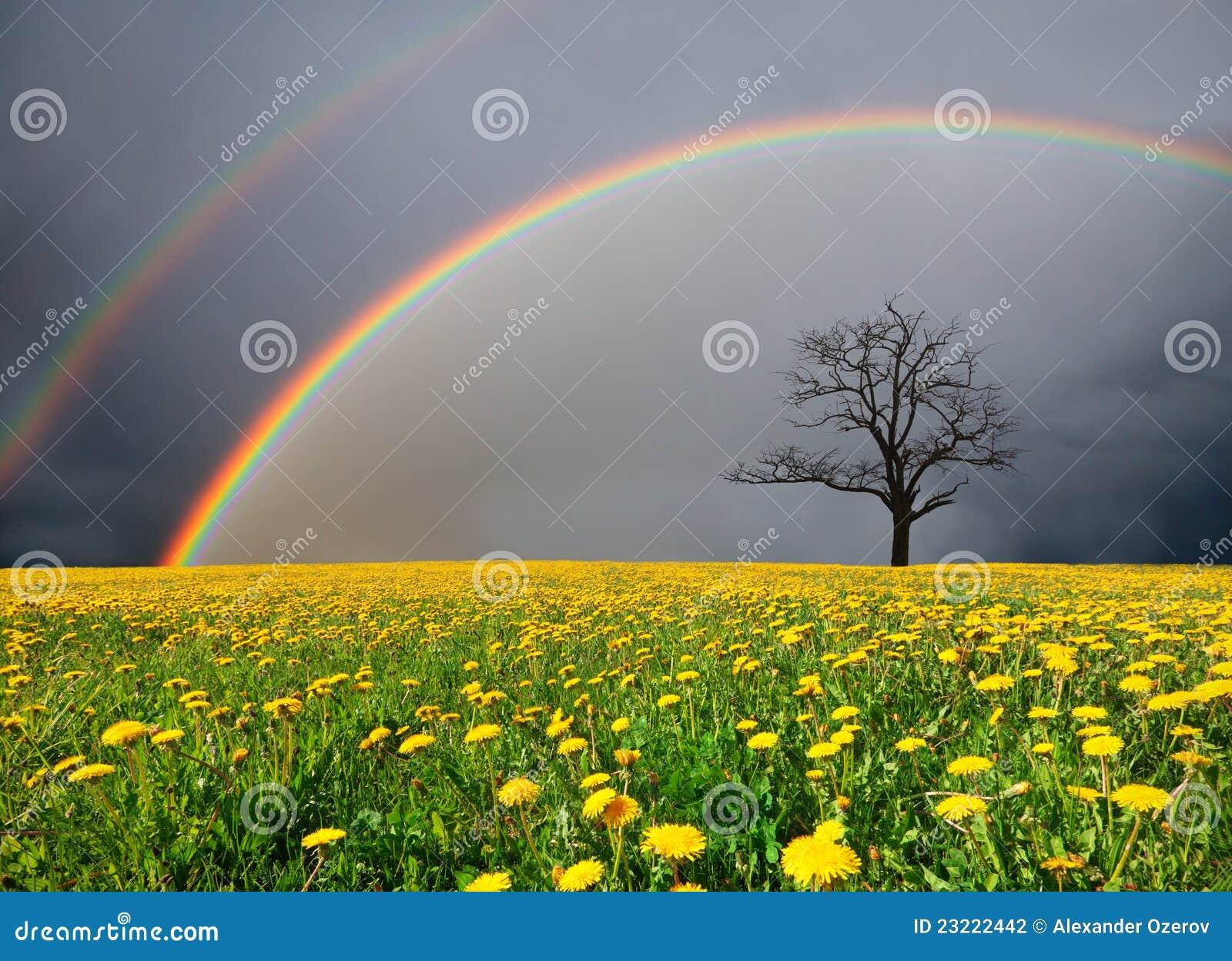 Campo e árvore inoperante sob o céu nebuloso com arco-íris
