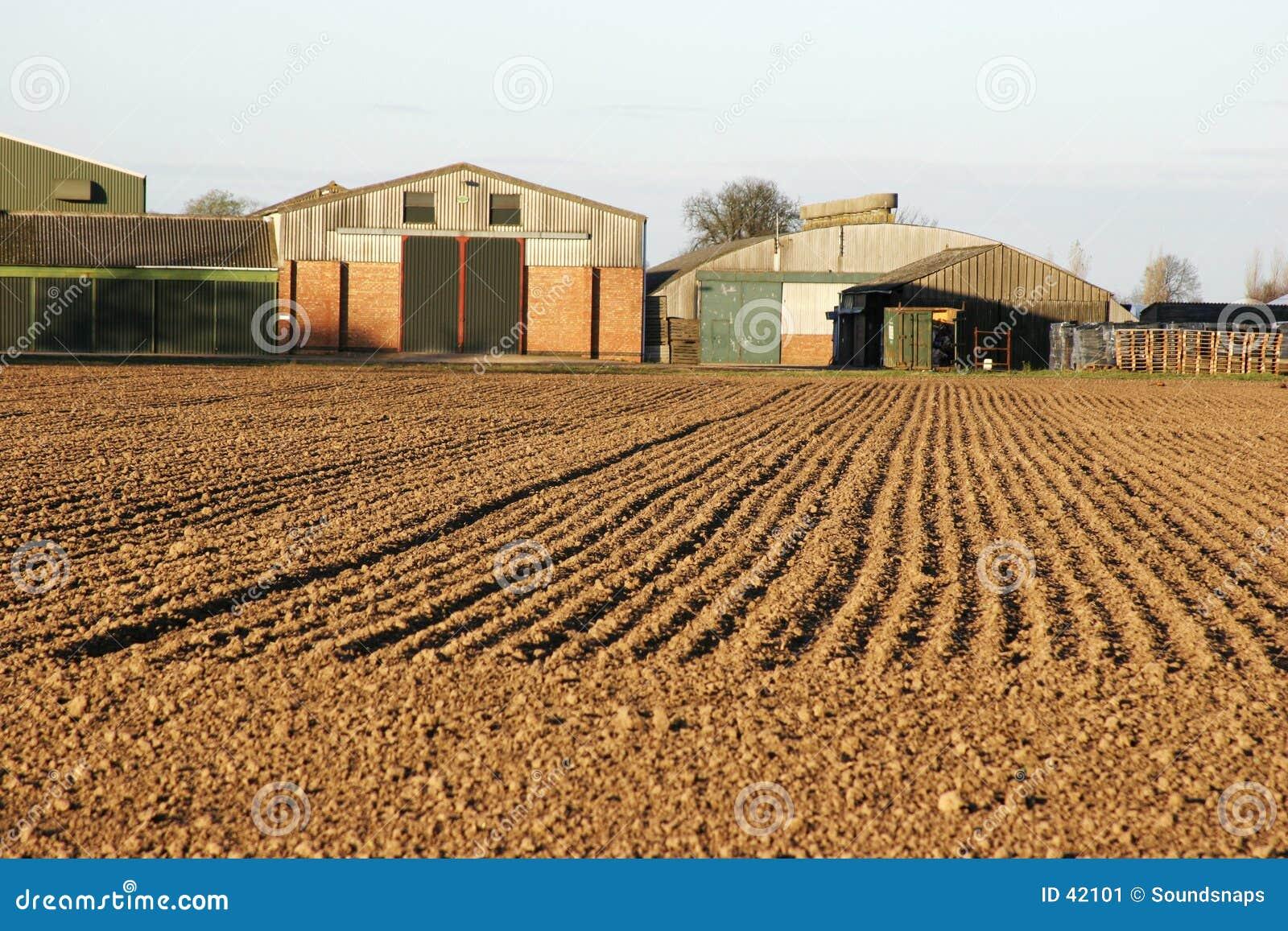 Campo ed azienda agricola