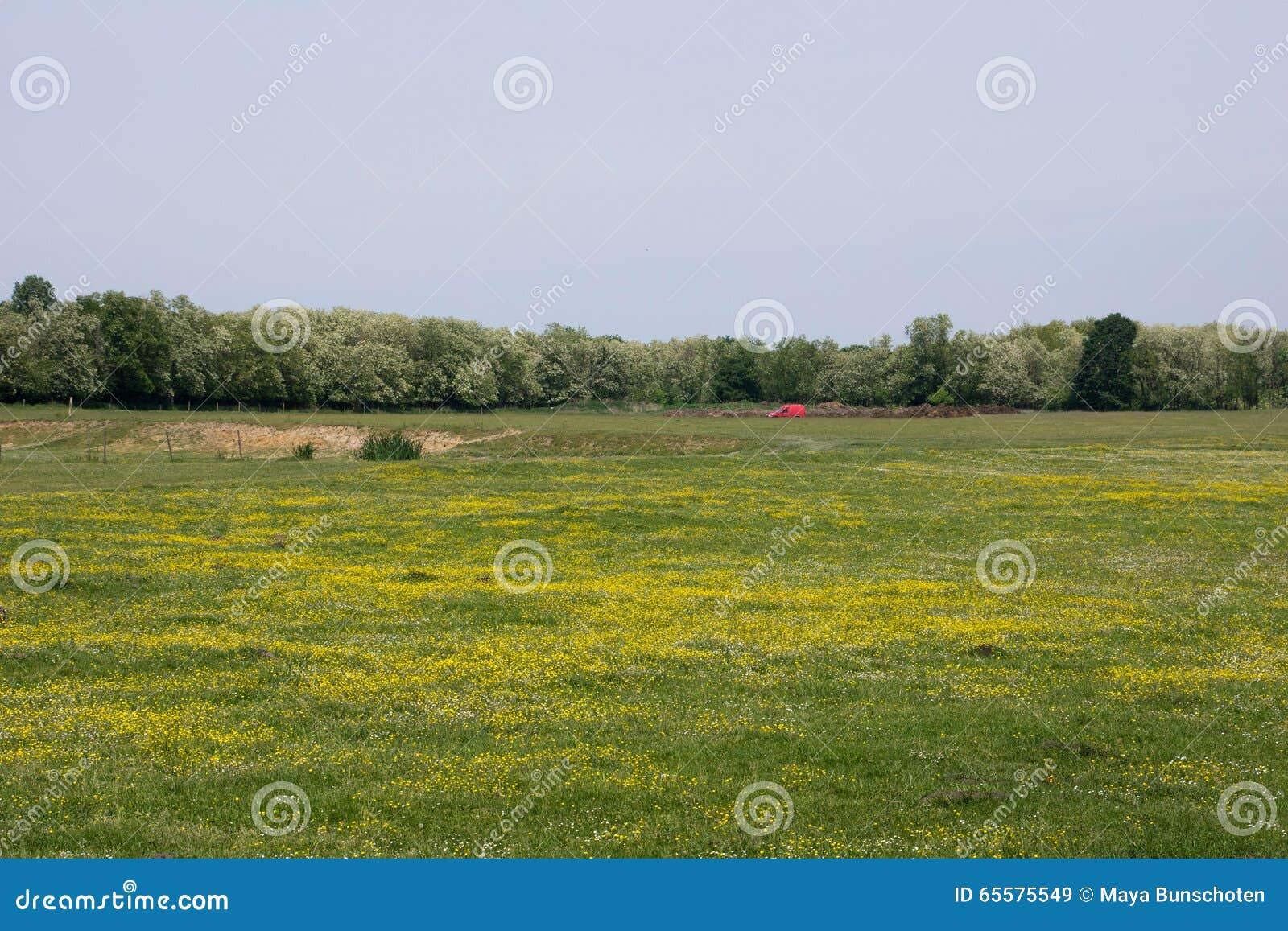 Campo em Hungria