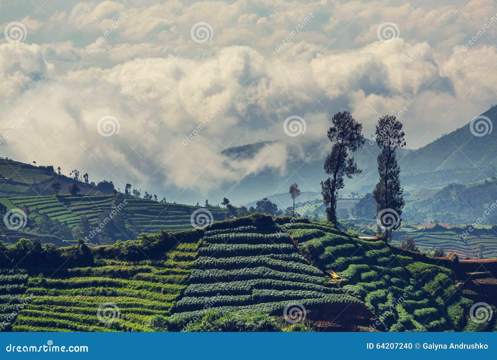 Campo en Indonesia