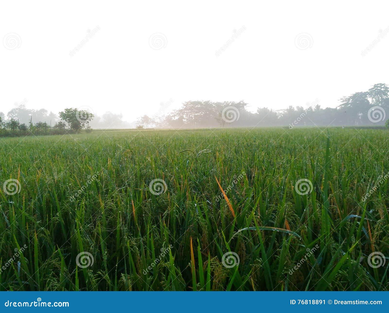 Campo fresco de la mañana