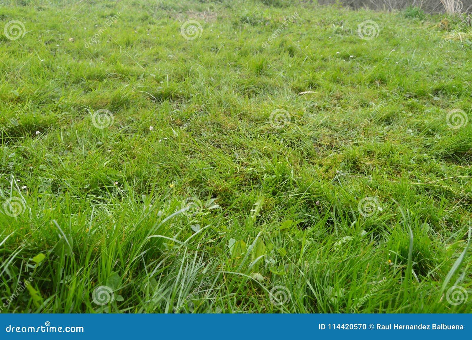 Campo hermoso de la hierba densa en el parque natural de Gorbeia Paisajes de la naturaleza de las plantas