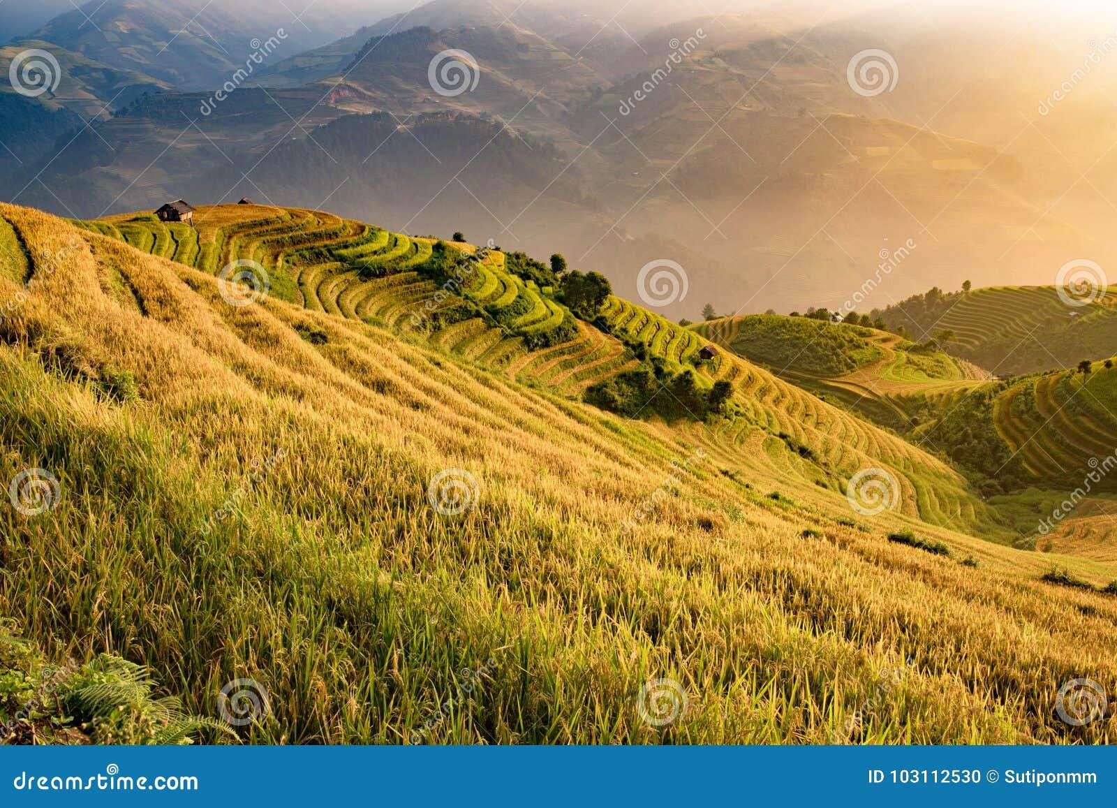 Campo Hermoso Vietnamita Del Arroz Del Paisaje En Terraza En