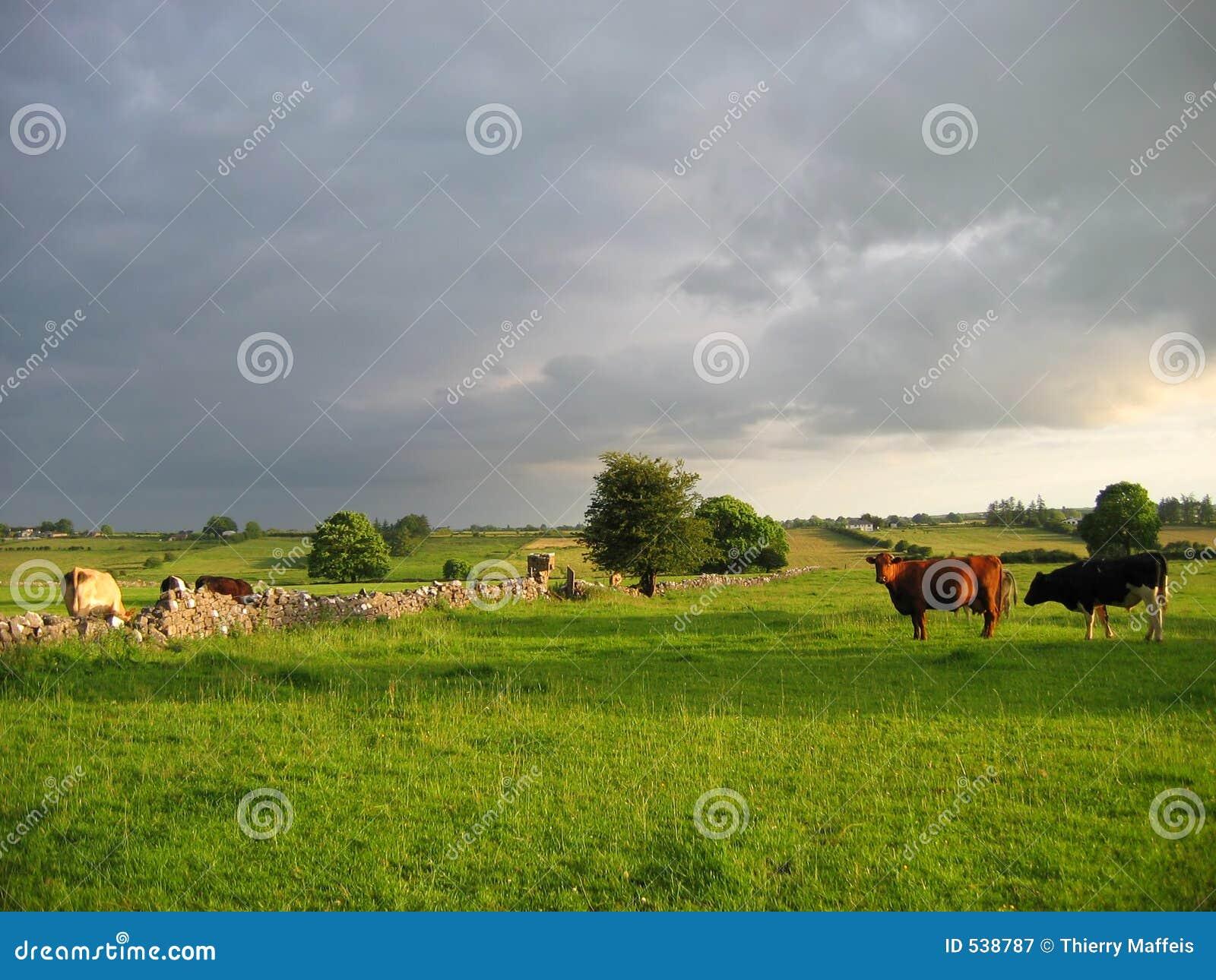 Campo irlandês