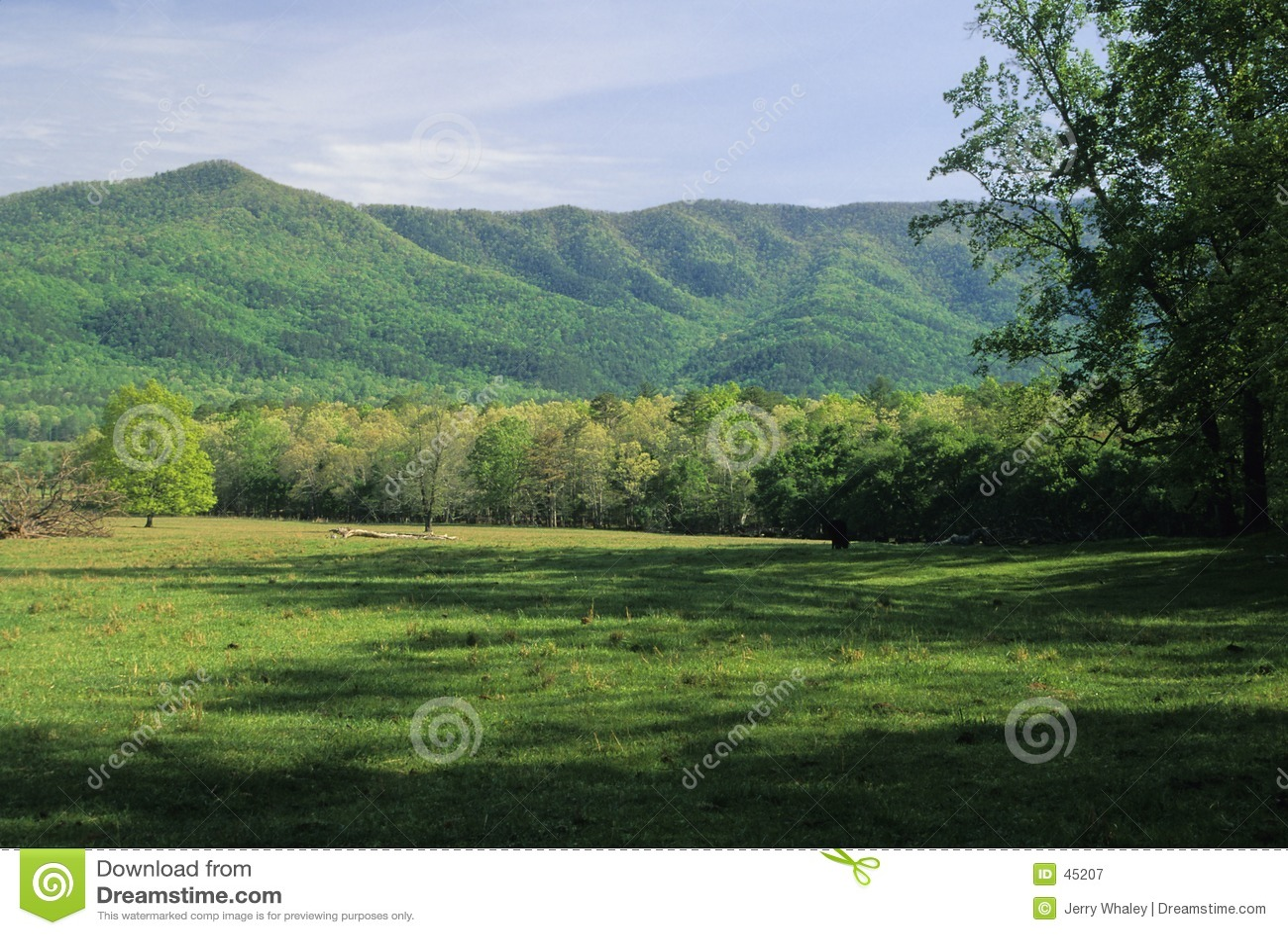 Campo, montanhas, mola