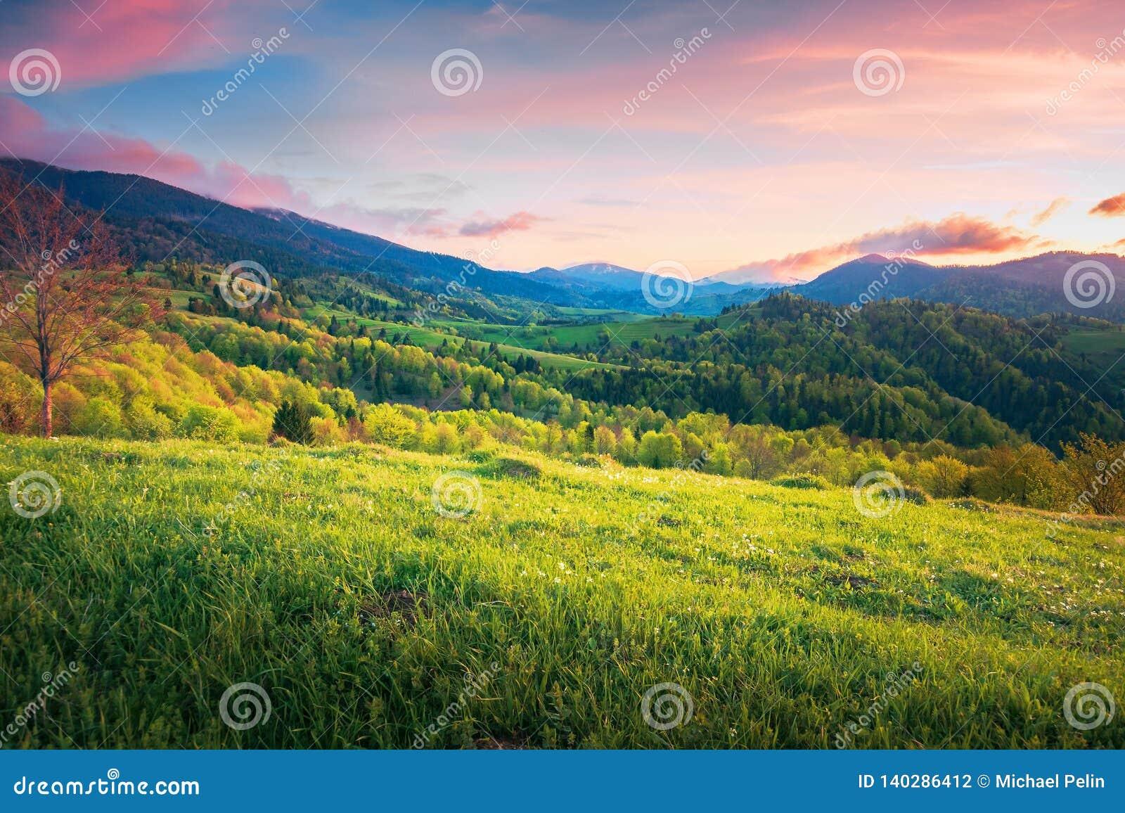 Campo montanhoso da primavera no por do sol